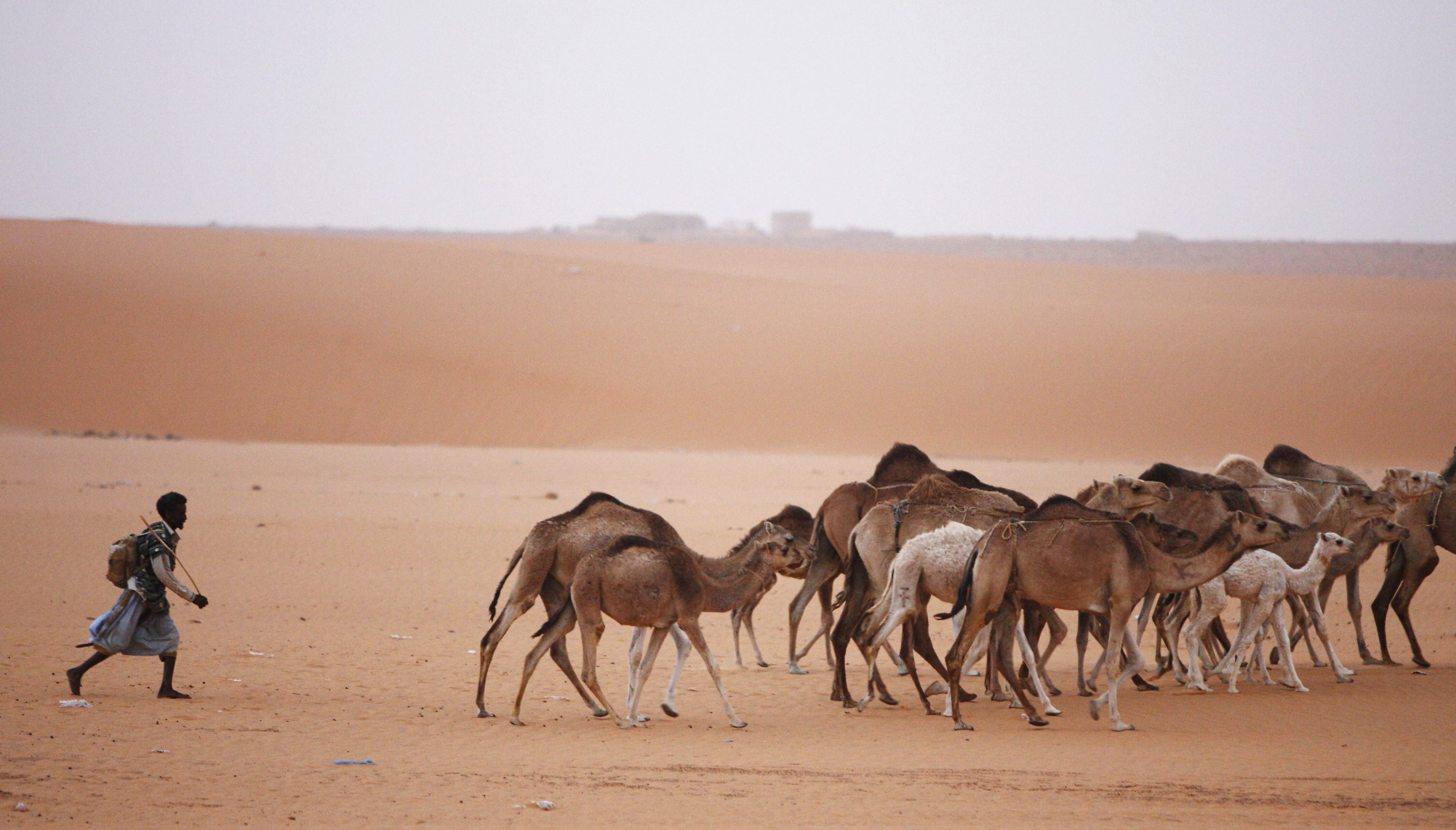 A Mauritanian man herds camels near the ancient desert town of Changuetti, 500 km (300 miles) northeast of the capital Nouakchott in this March 10, 2007 picture. Herding camels or goats out in the sun-blasted dunes of the Sahara, or serving hot mint tea to guests in the richly carpeted villas of Nouakchott, Mauritanian slaves serve their masters and are passed on as family chattels from generation to generation. Picture taken March 10, 2007. To match feature SLAVERY-MAURITANIA/