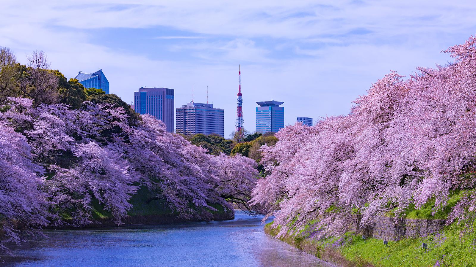 Spring time in Tokyo