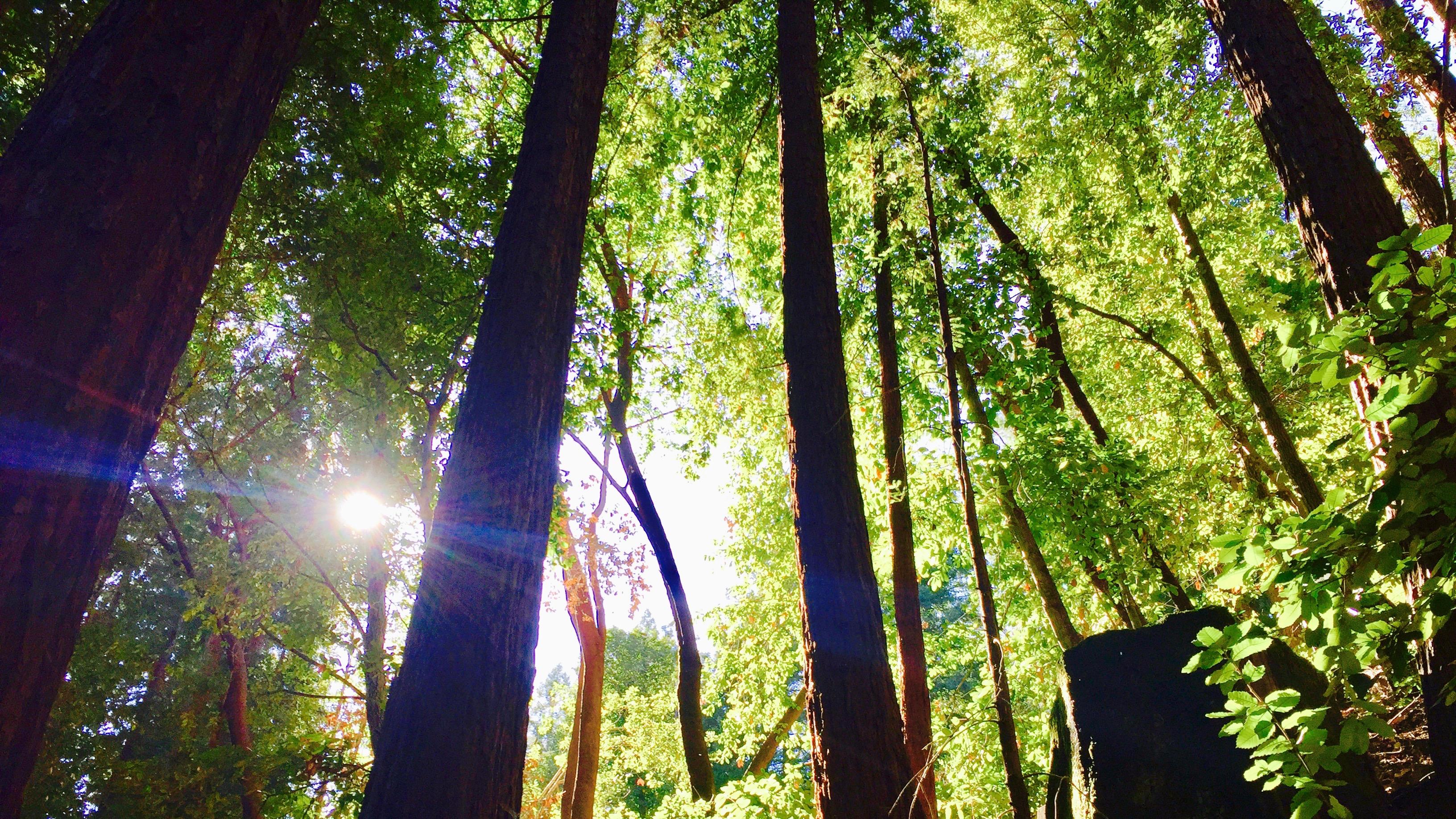 Forest medicine.