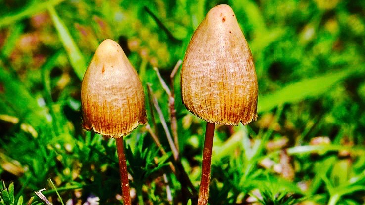Scientists studying psilocybin accidentally proved the self