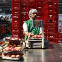 An employee weighs tomatoes after packing them at a Big Basket warehouse on the outskirts of Mumbai