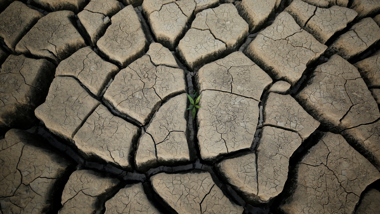 """A plant grows between cracked mud in a normally submerged area at Theewaterskloof dam near Cape Town, South Africa, January 21, 2018. The dam, which supplies most of Cape Town's potable water, is currently dangerously low as the city faces """"Day Zero"""", the point at which taps will be shut down across the city. REUTERS/Mike Hutchings  SEARCH """"HUTCHINGS ZERO"""" FOR THIS STORY. SEARCH """"WIDER IMAGE"""" FOR ALL STORIES. TPX IMAGES OF THE DAY. - RC196F400A30"""