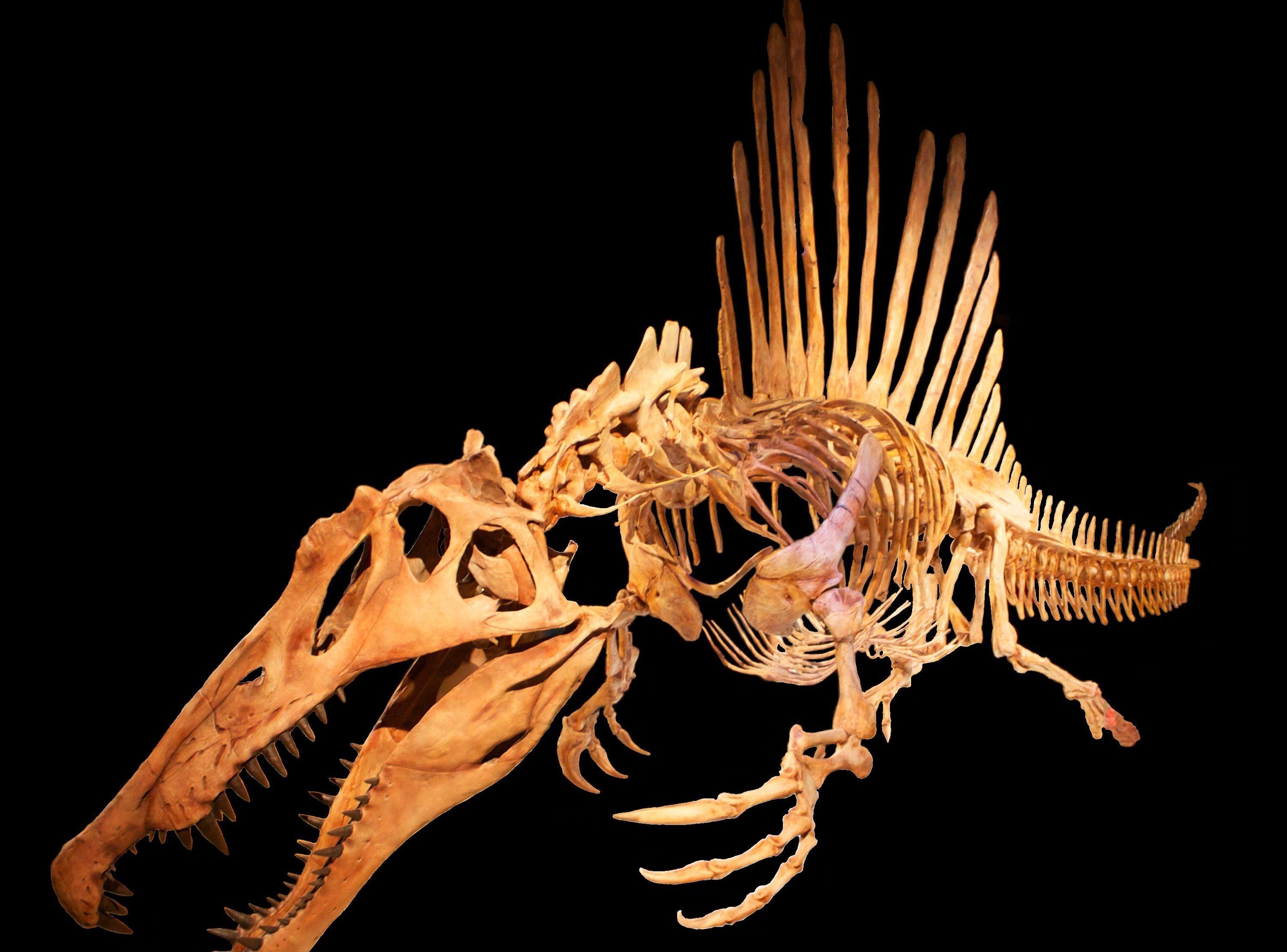 Spinosaurus_swimming_black_background