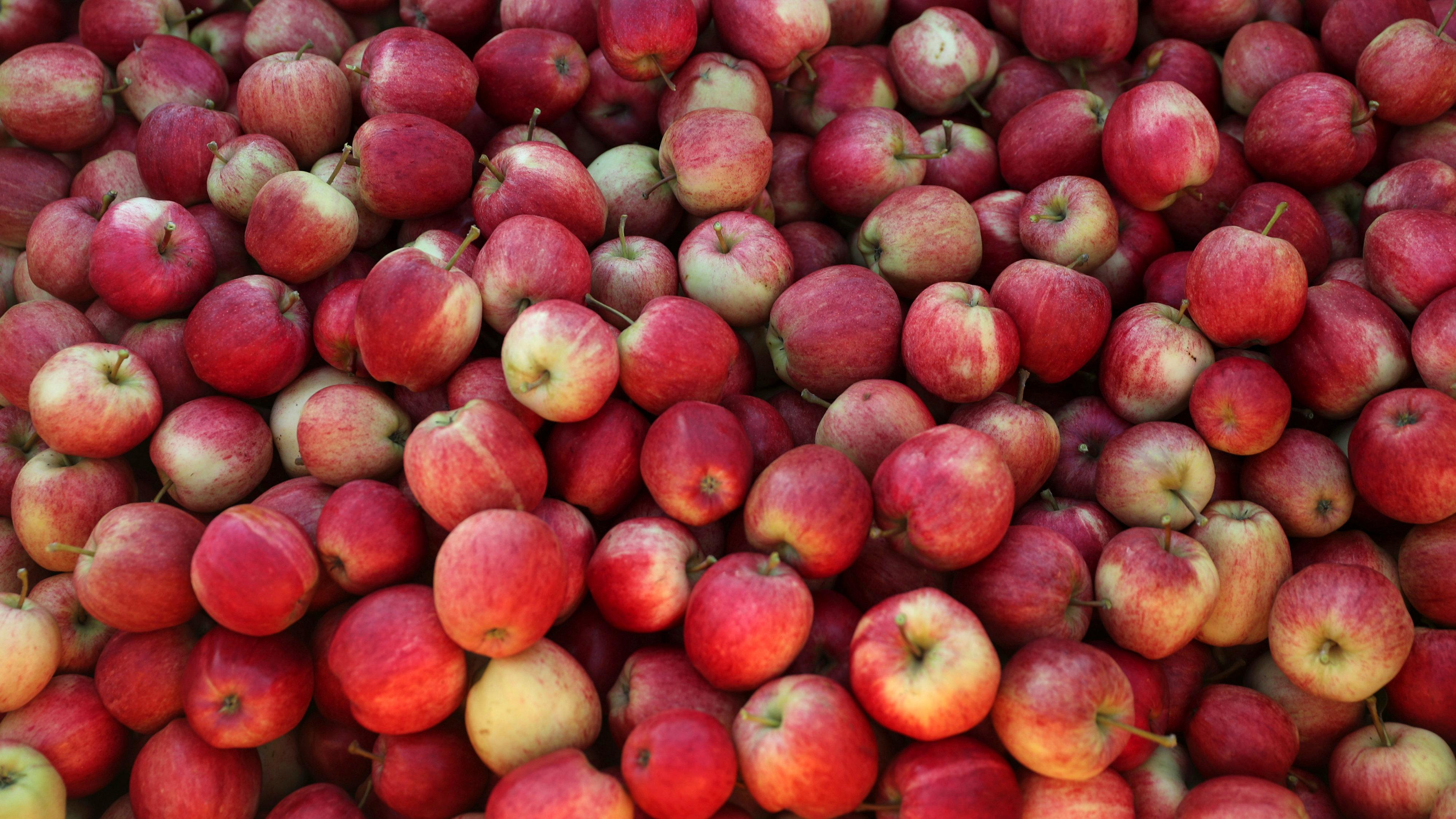 UK fruit picking1