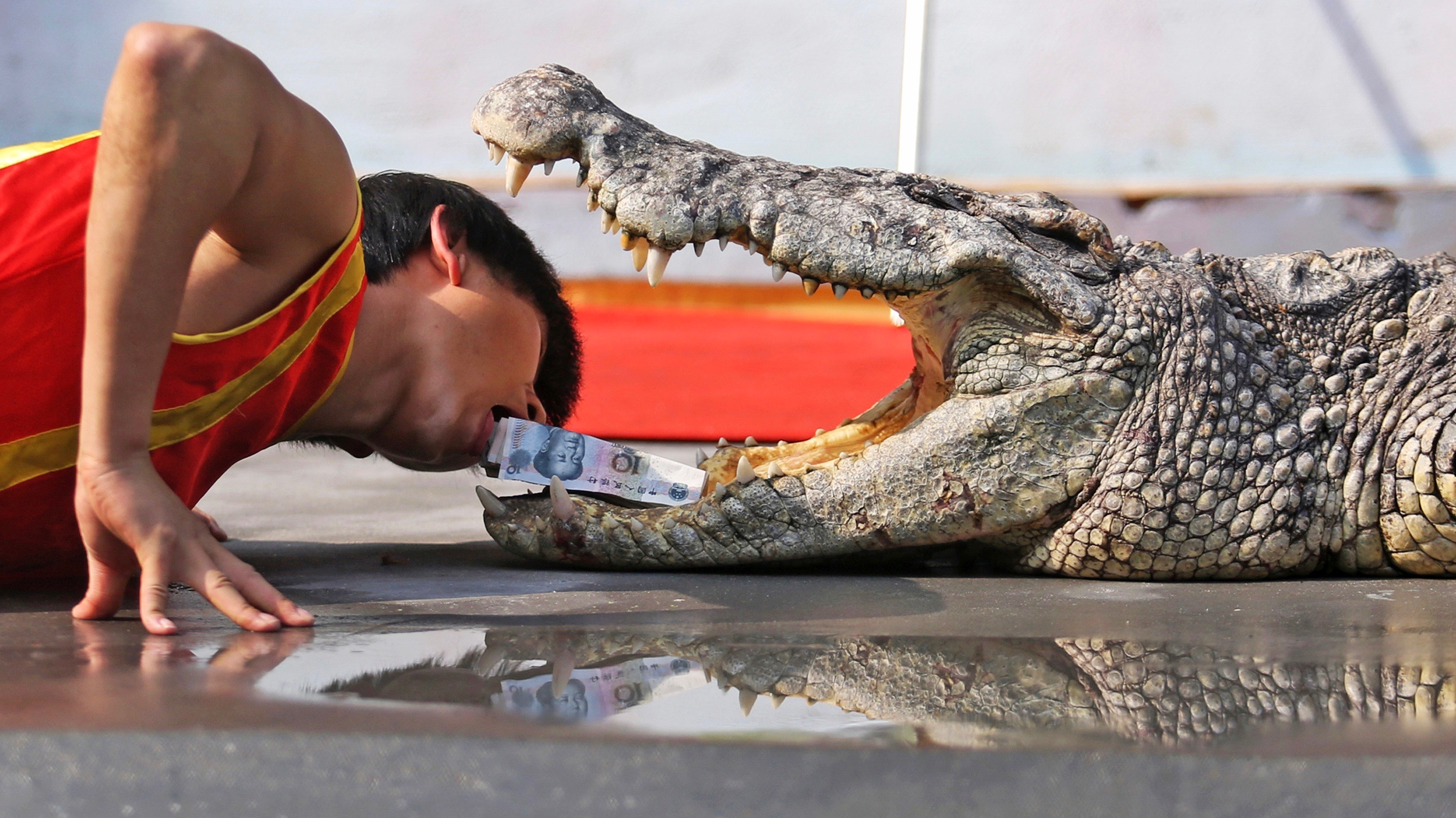 Chinese zoo demonstration—human head in croc mouth.