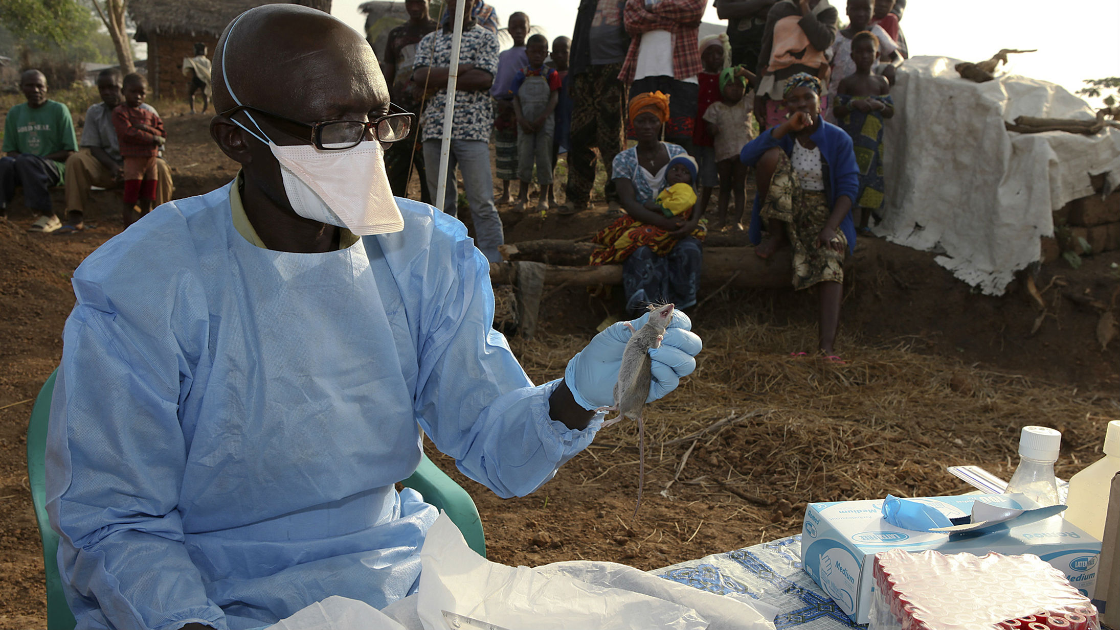 A researcher holding up a Lassa fever is spread primarily through the urine or feces of the multimammate rat surrounded by people.