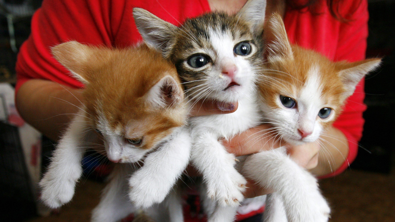 A bunch of kitties