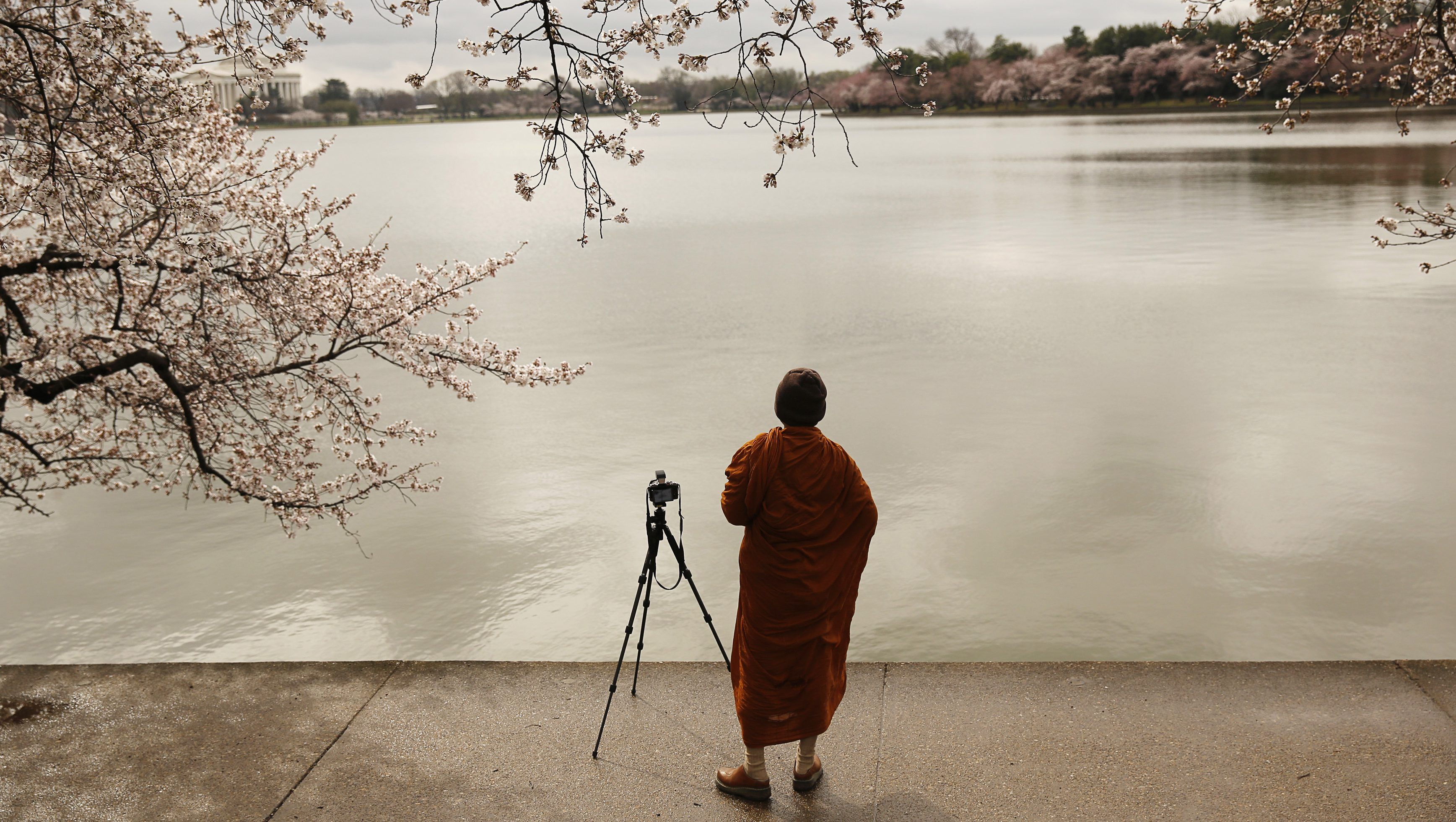 A Buddhist monk photographs emerging cherry blossom trees around the Tidal Basin in Washington April 8, 2014.