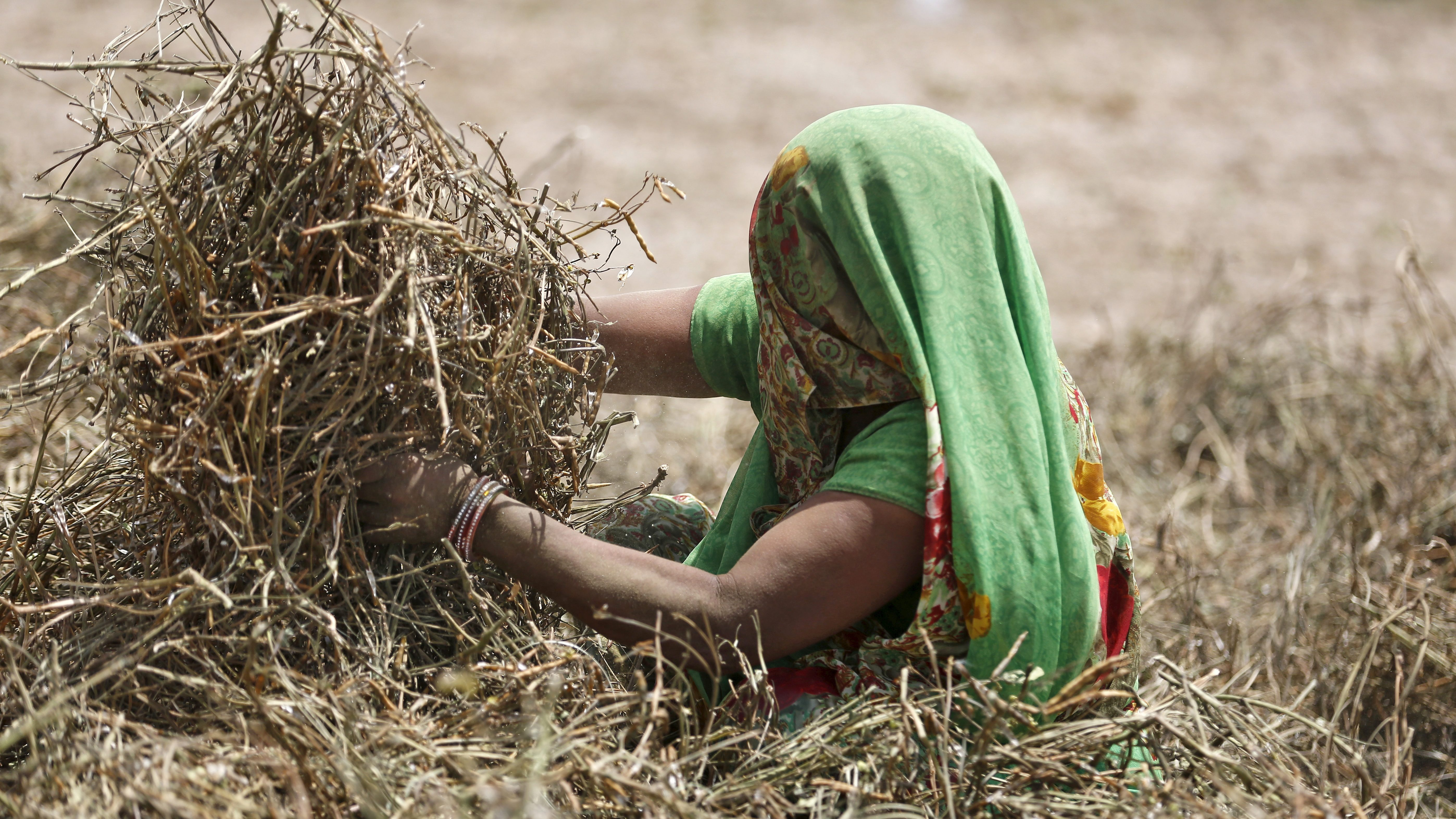 Farmer removes husks from green gram at her farm on the outskirts of Ahmedabad, India