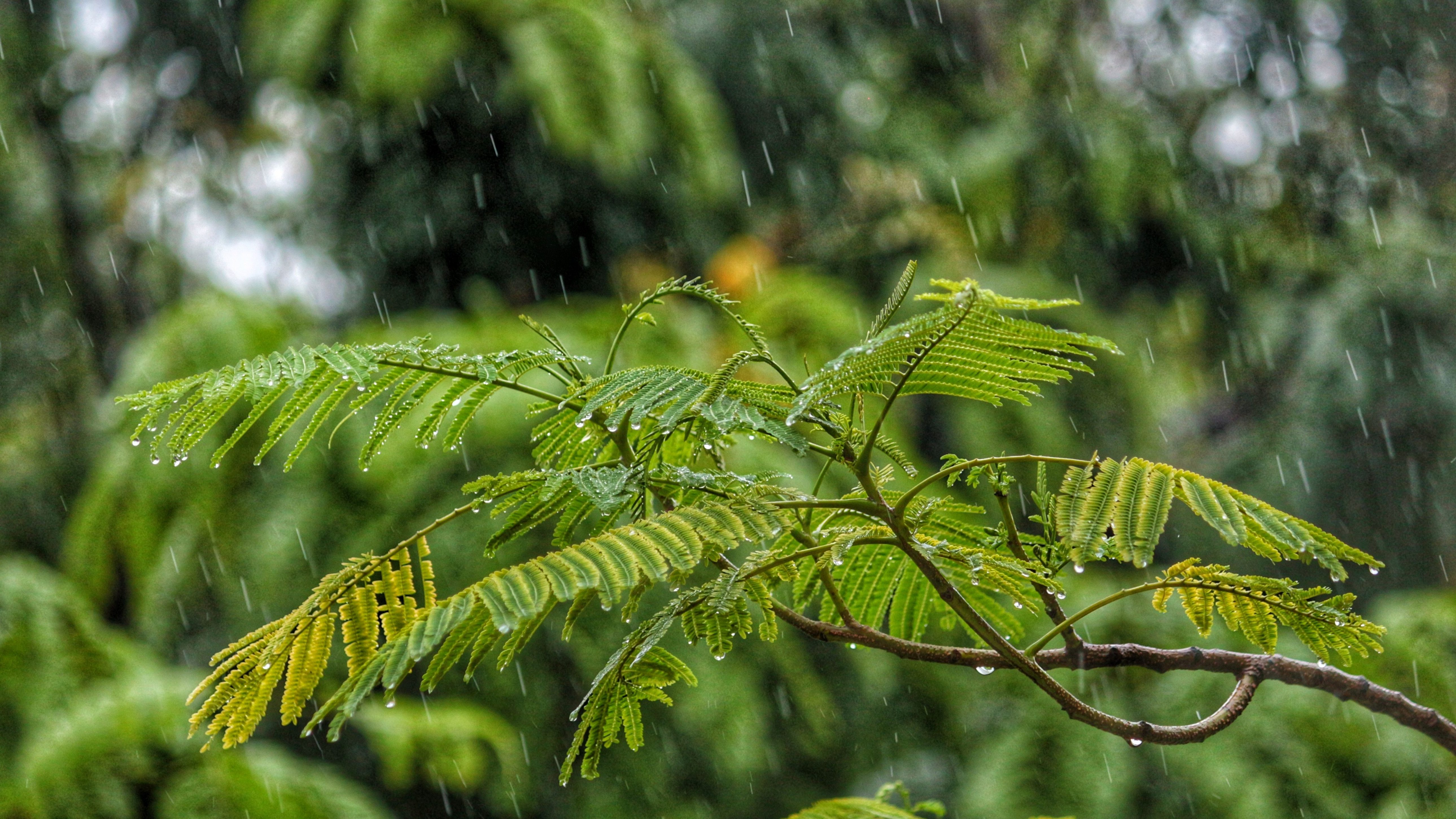 An image of rain falling on a fern-like green plant.