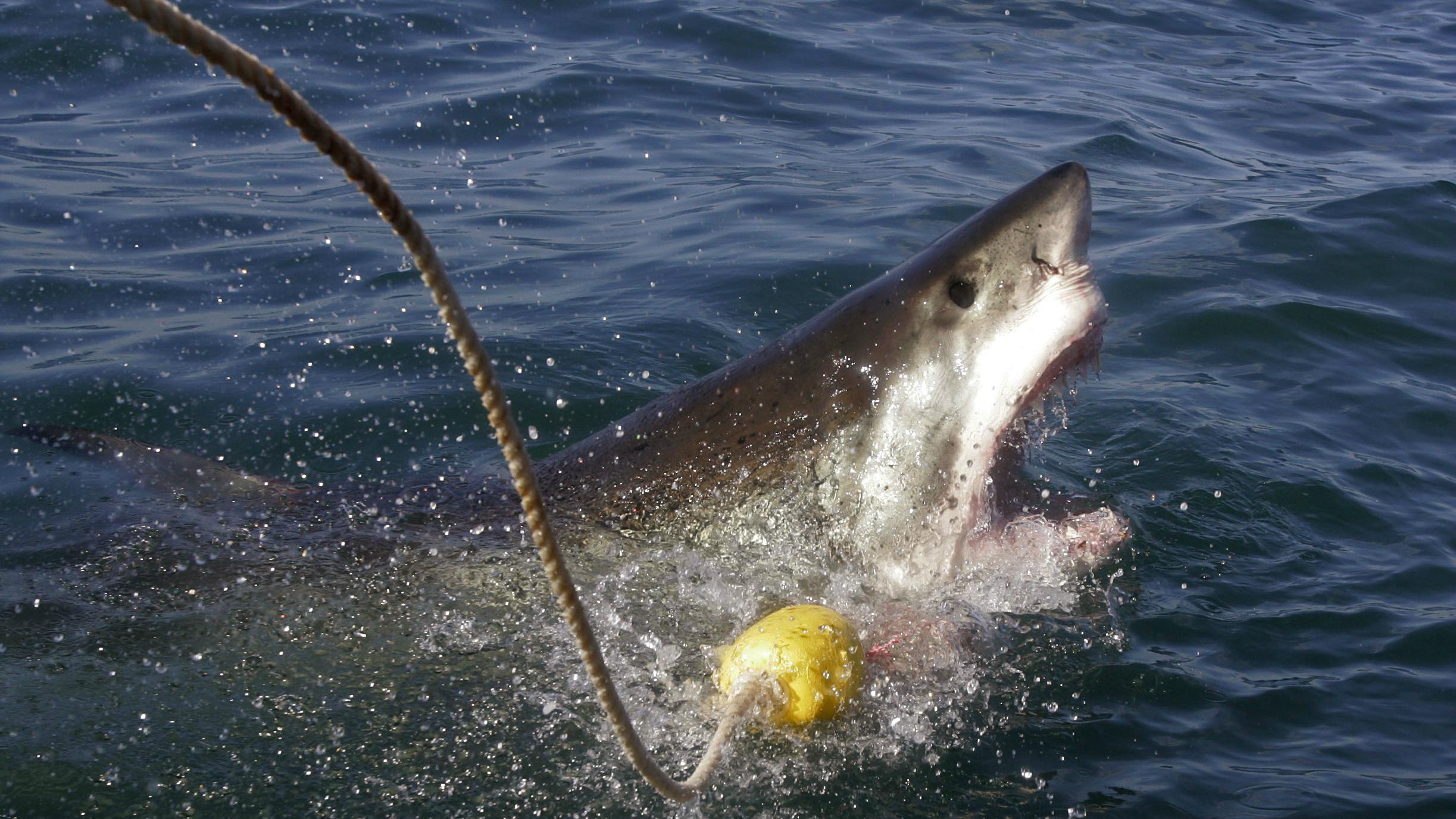 trump shark stormy daniels ap Schalk van Zuydam