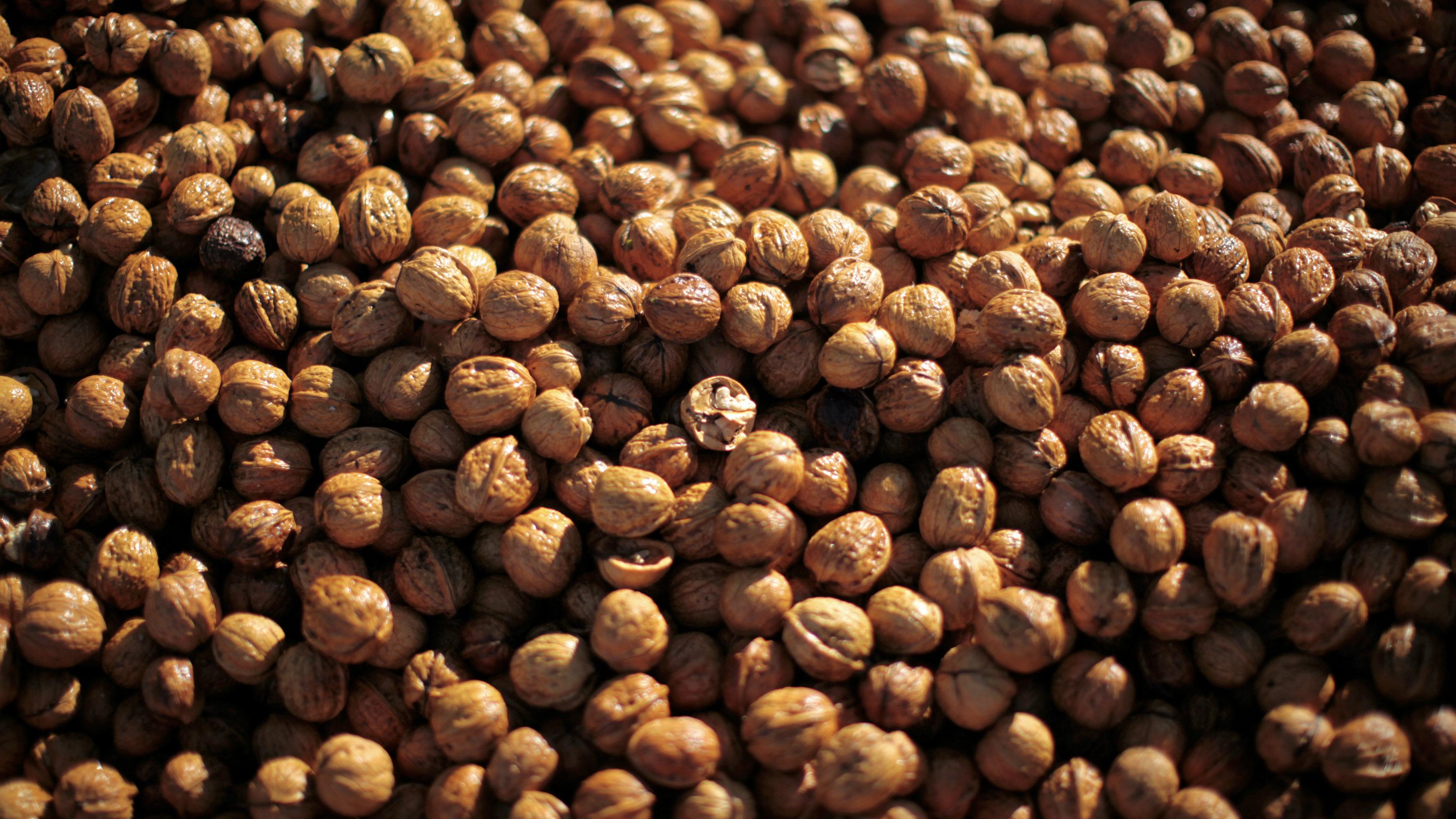 c walnuts RTR2S52J Lucy Nicholson