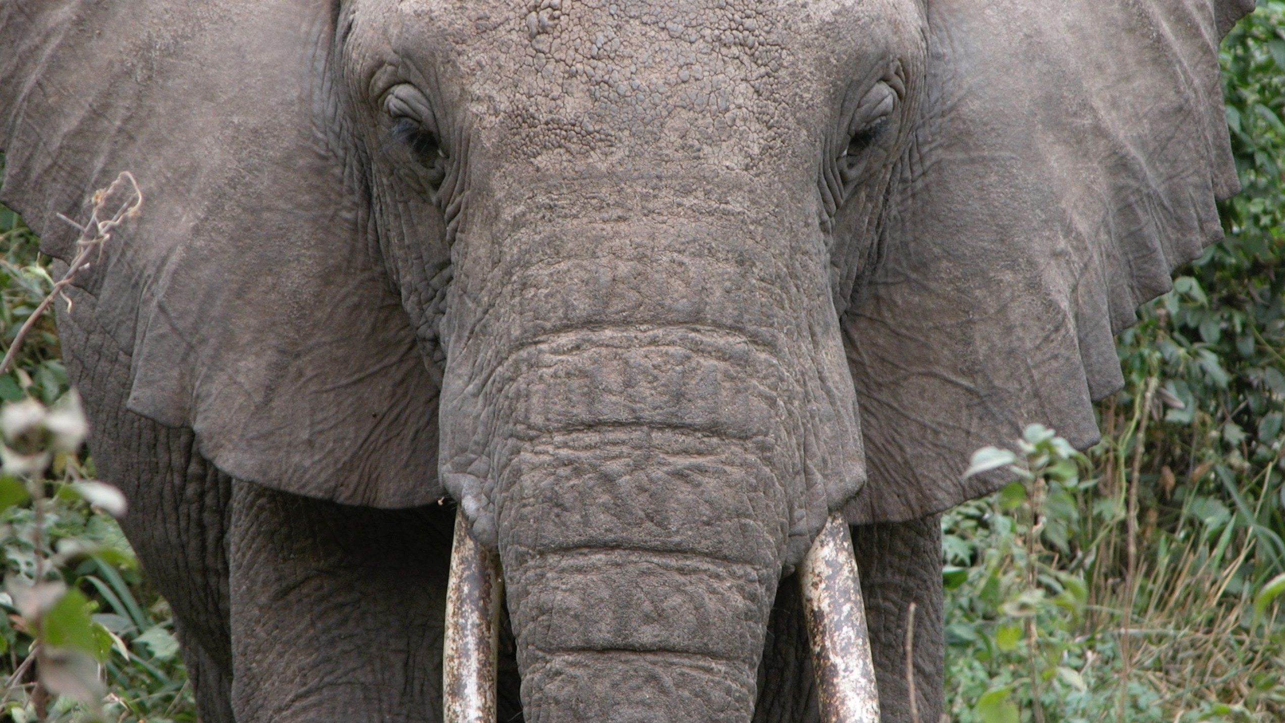 A close-up of an elephant face.