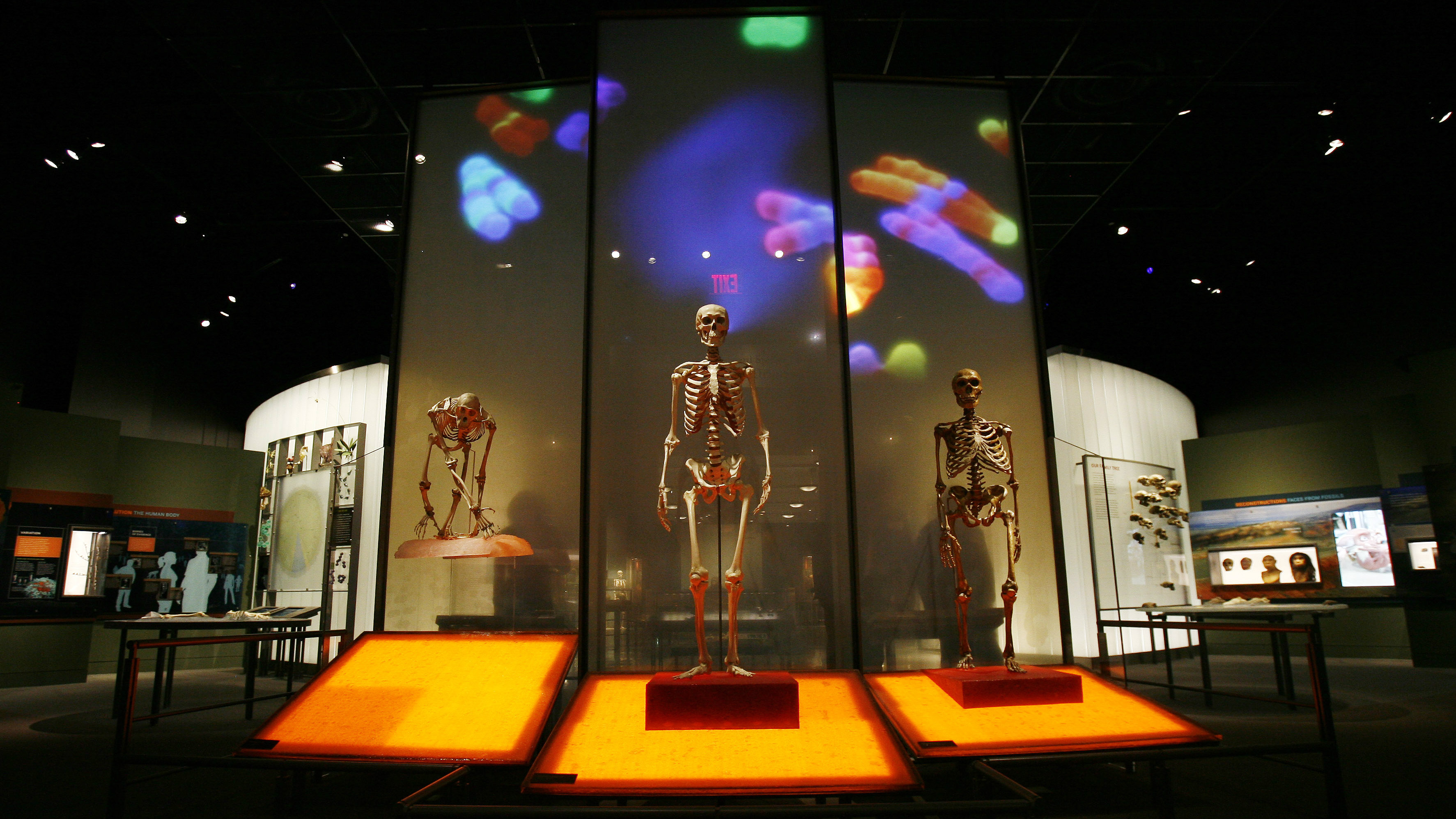 The entrance to the Anne and Bernard Spitzer Hall of Human Origins at the American Museum of Natural History, a permanent exhibition hall that presents the remarkable history of human evolution from our earliest ancestors millions of years ago to modern Homo sapiens, is seen in New York, February 7, 2007. The exhibit will open to the public on February 10, 2007.