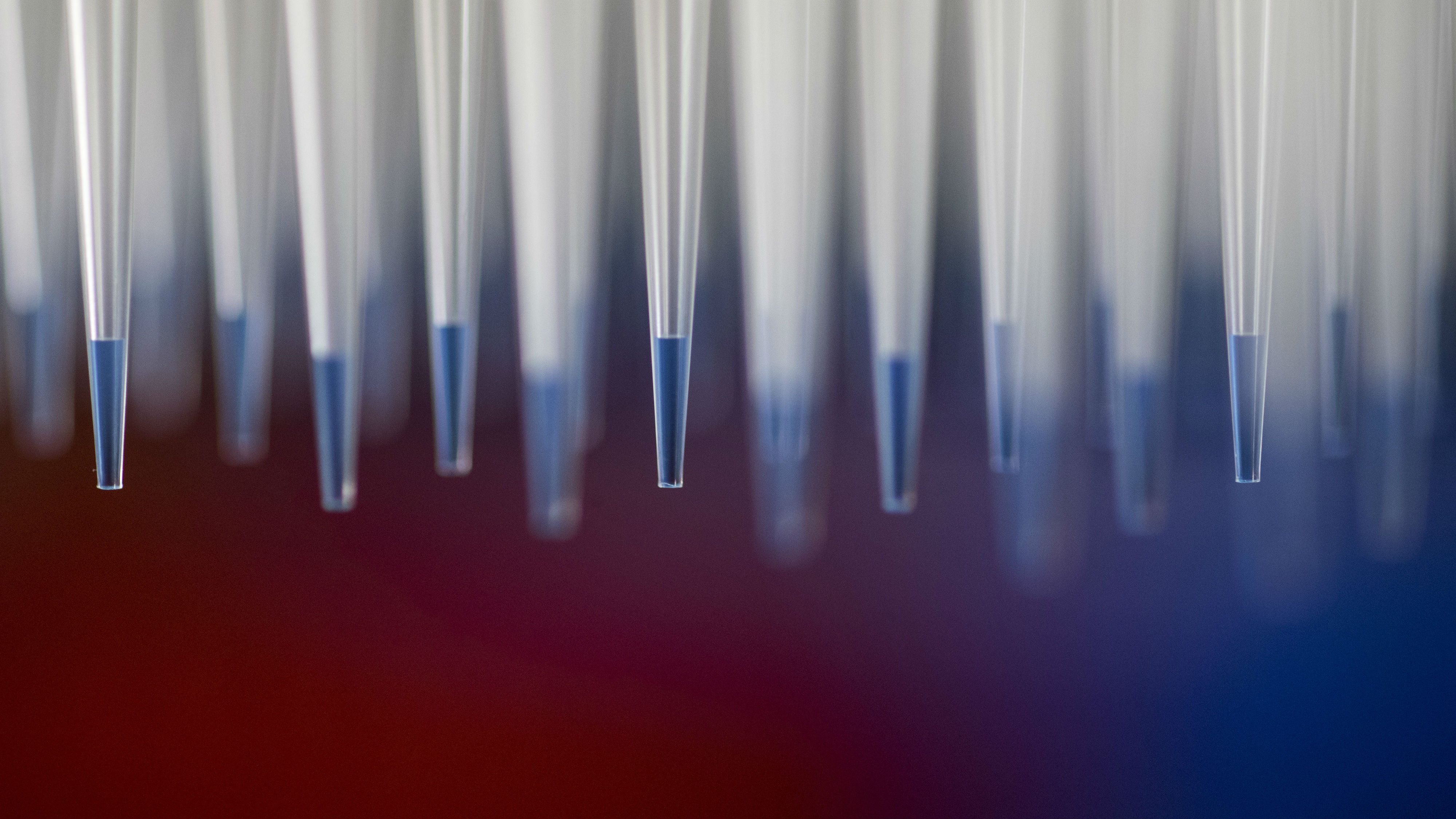 rows of flu vaccines in pipettes