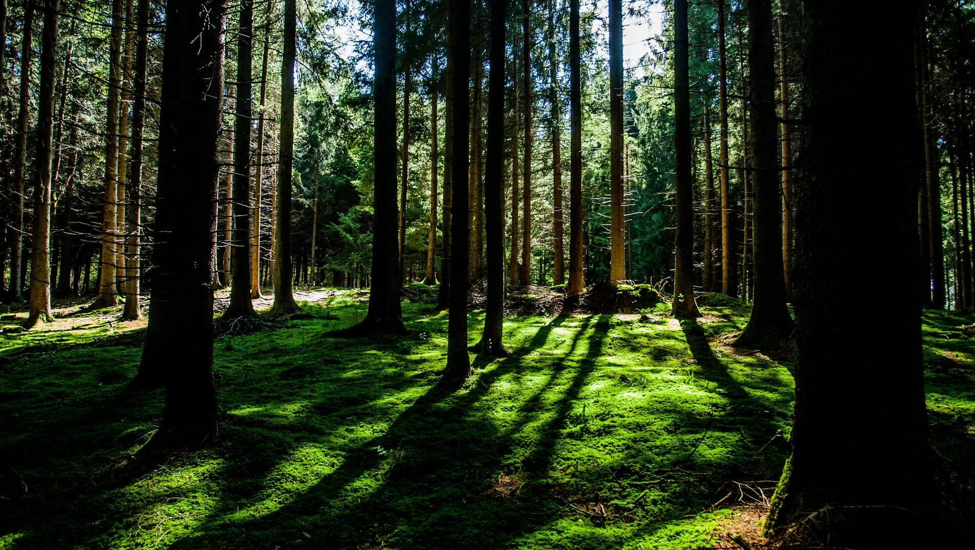 Just Being Outside Can Improve Your Psychological Health And Maybe