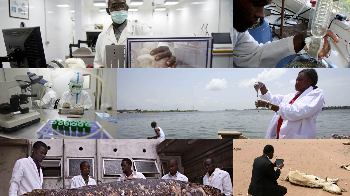 African scientists collage