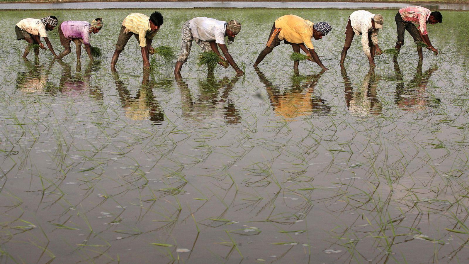 India-Rural-Farm