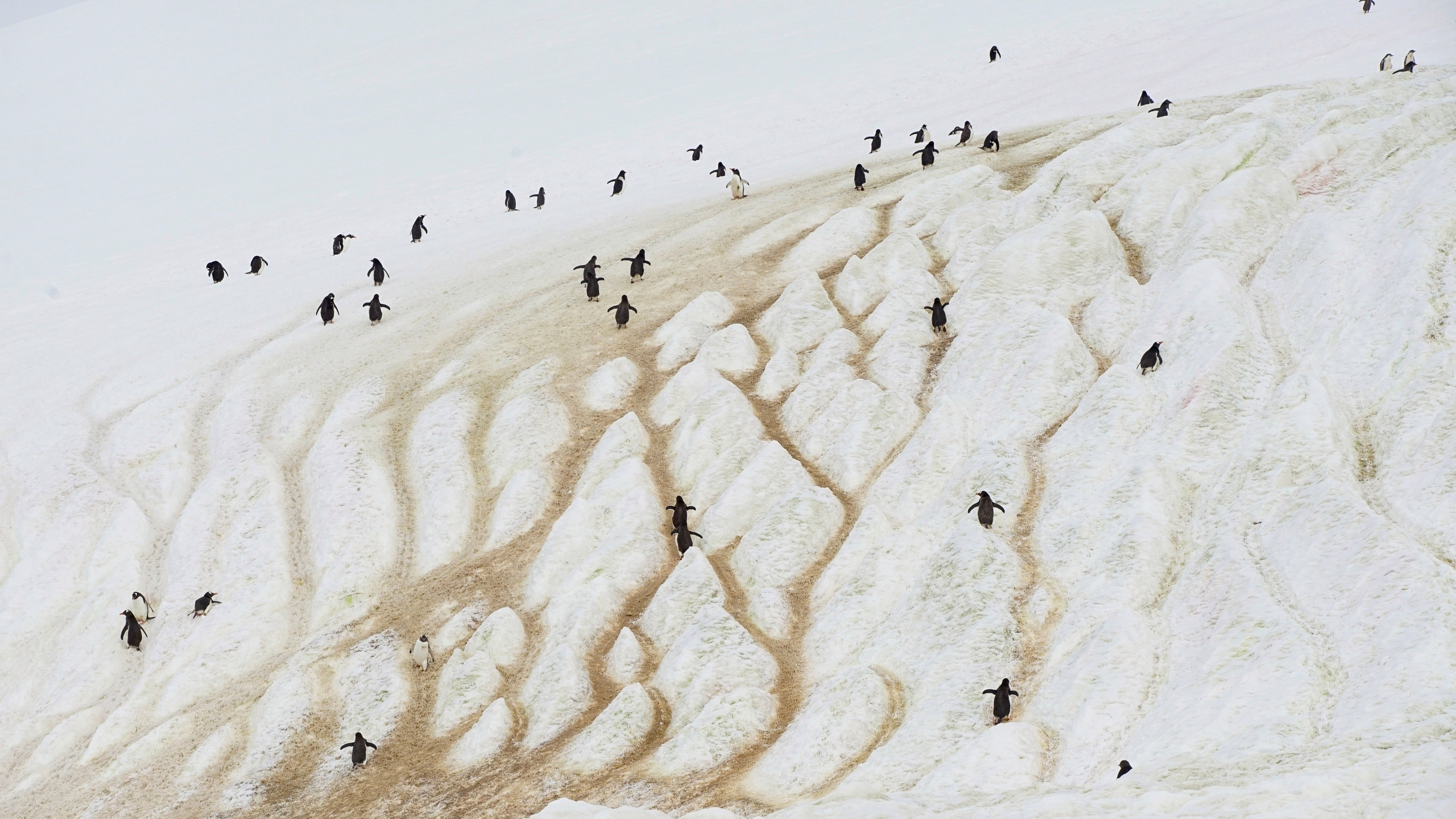 In the place where West and East Antarctic ice sheets meet is one of the least-explored regions on Earth. This is a picture of penguins that are in Antarctica but not in that region. We just thought they were cool looking.