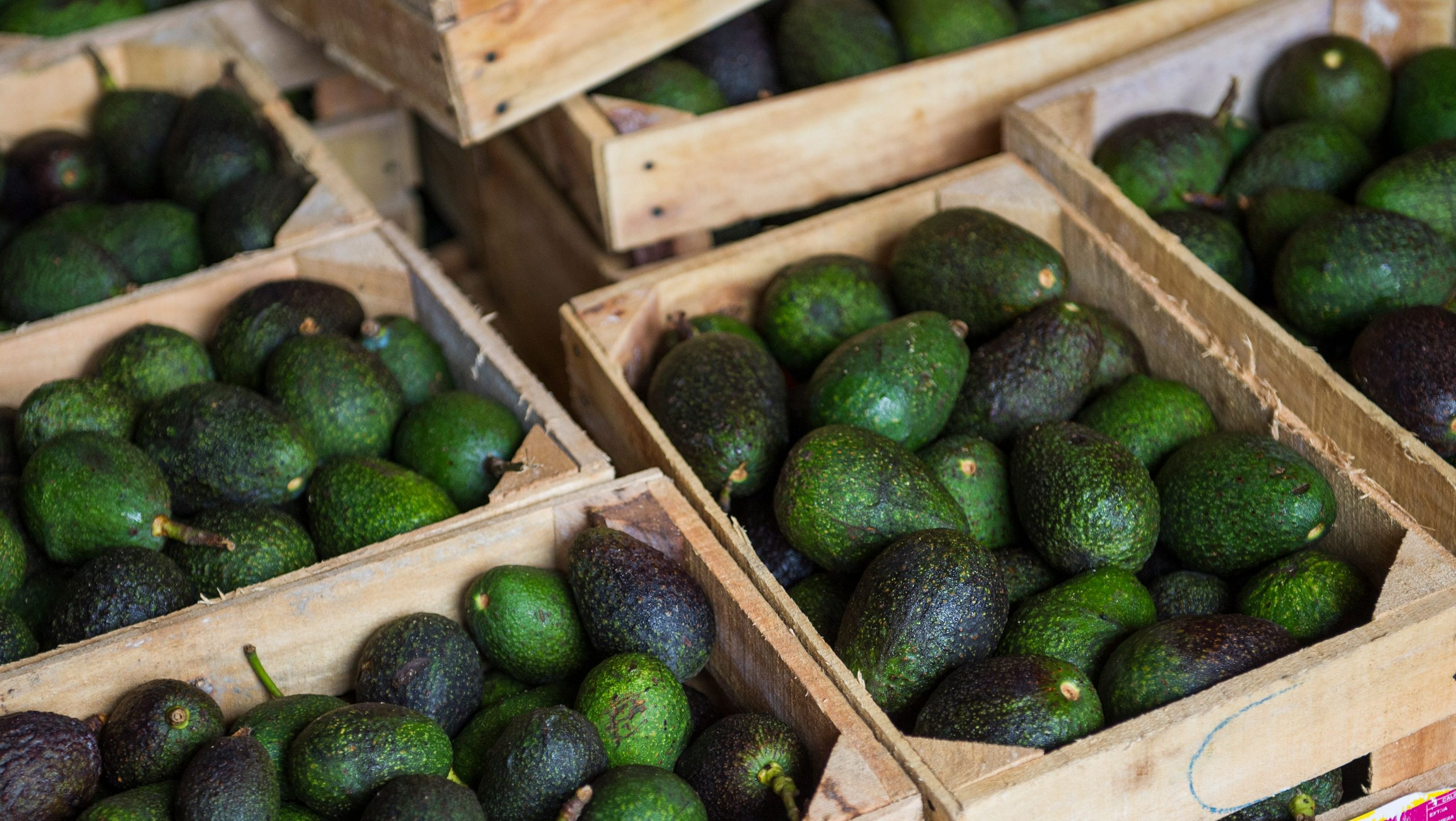 Wooden crates of avocados.