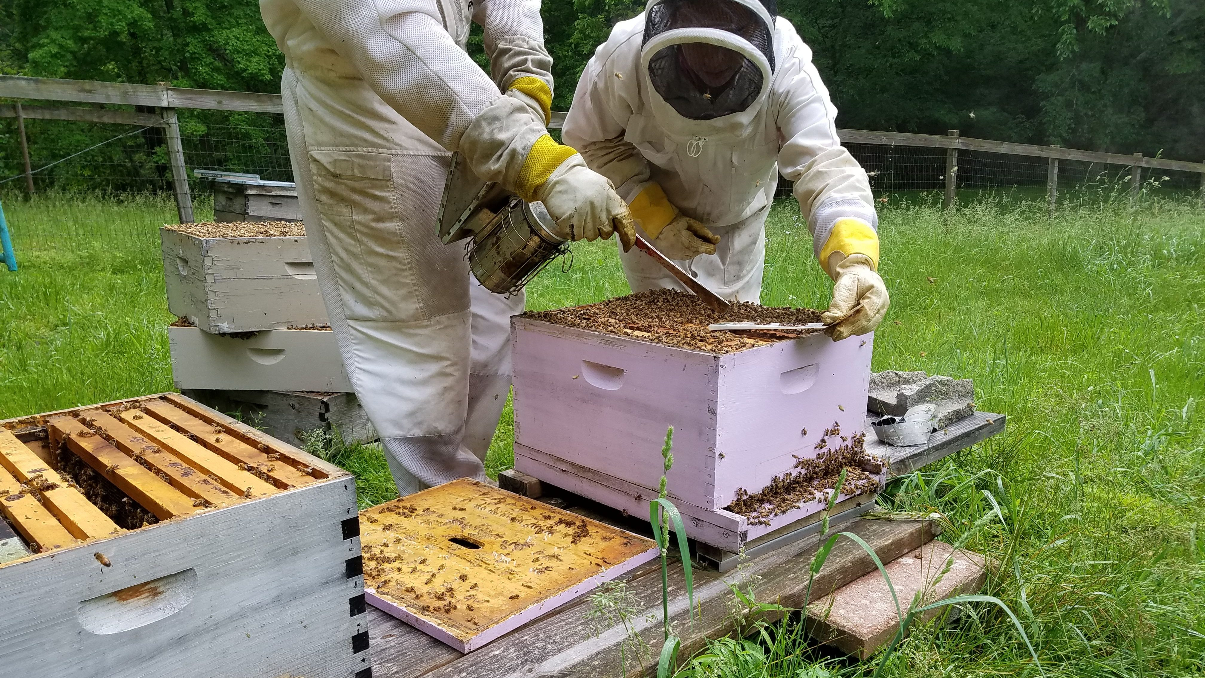 Beekeepers working on keeping their hive safe from thieves.
