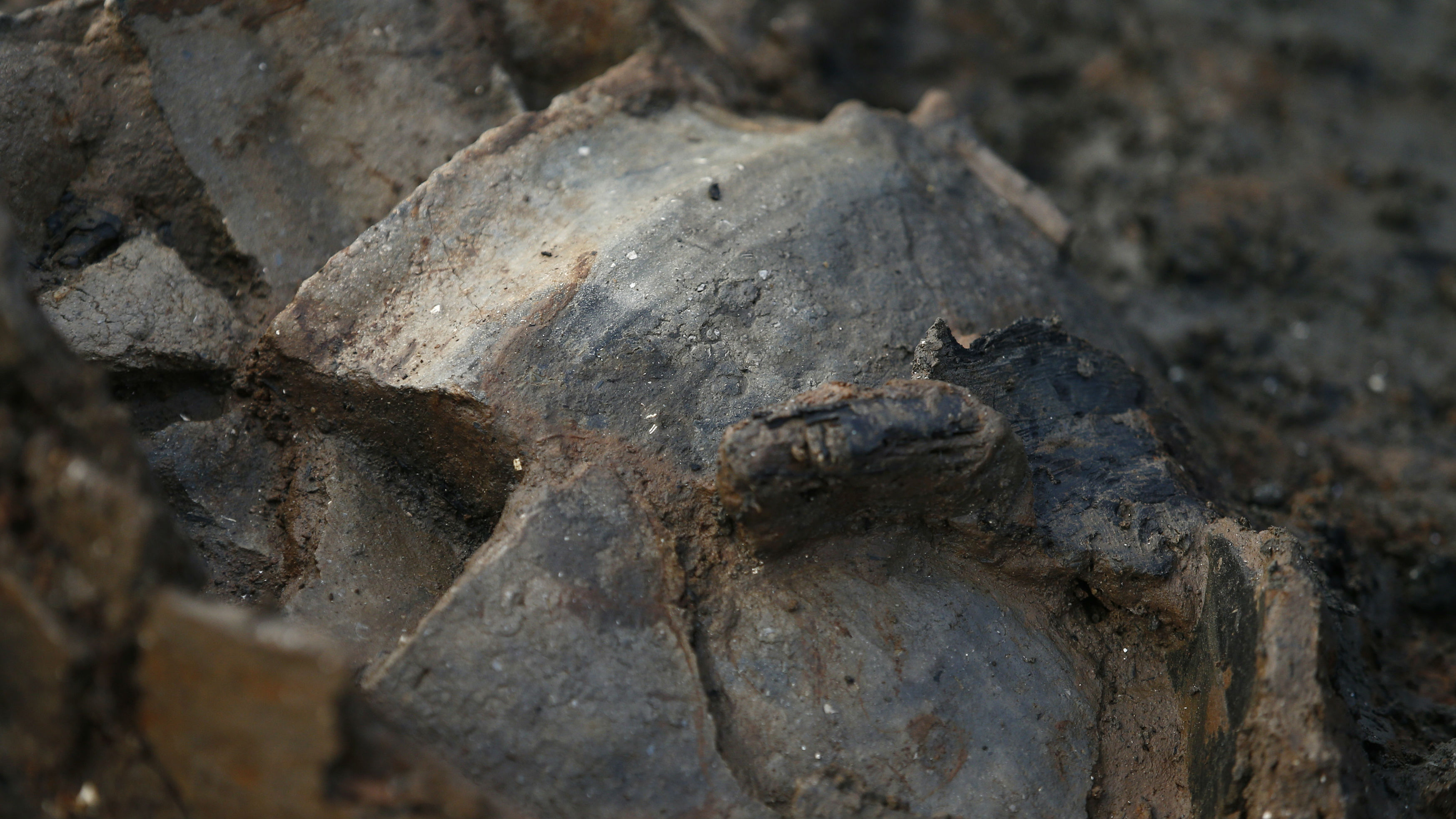 A clay pot is unearthed by archaeologists from the University of Cambridge Archaeological Unit, who are currently uncovering Bronze Age wooden houses, preserved in silt, from a quarry near Peterborough, Britain, January 12, 2016. Archaeologists said on Tuesday they had discovered what were believed to be the best-preserved Bronze Age dwellings ever found in Britain, providing an extraordinary insight into prehistoric life from 3,000 years ago. The settlement of large circular wooden houses, built on stilts, collapsed in a fire and plunged into a river where it was preserved in silts leaving them in pristine condition, Historic England said.