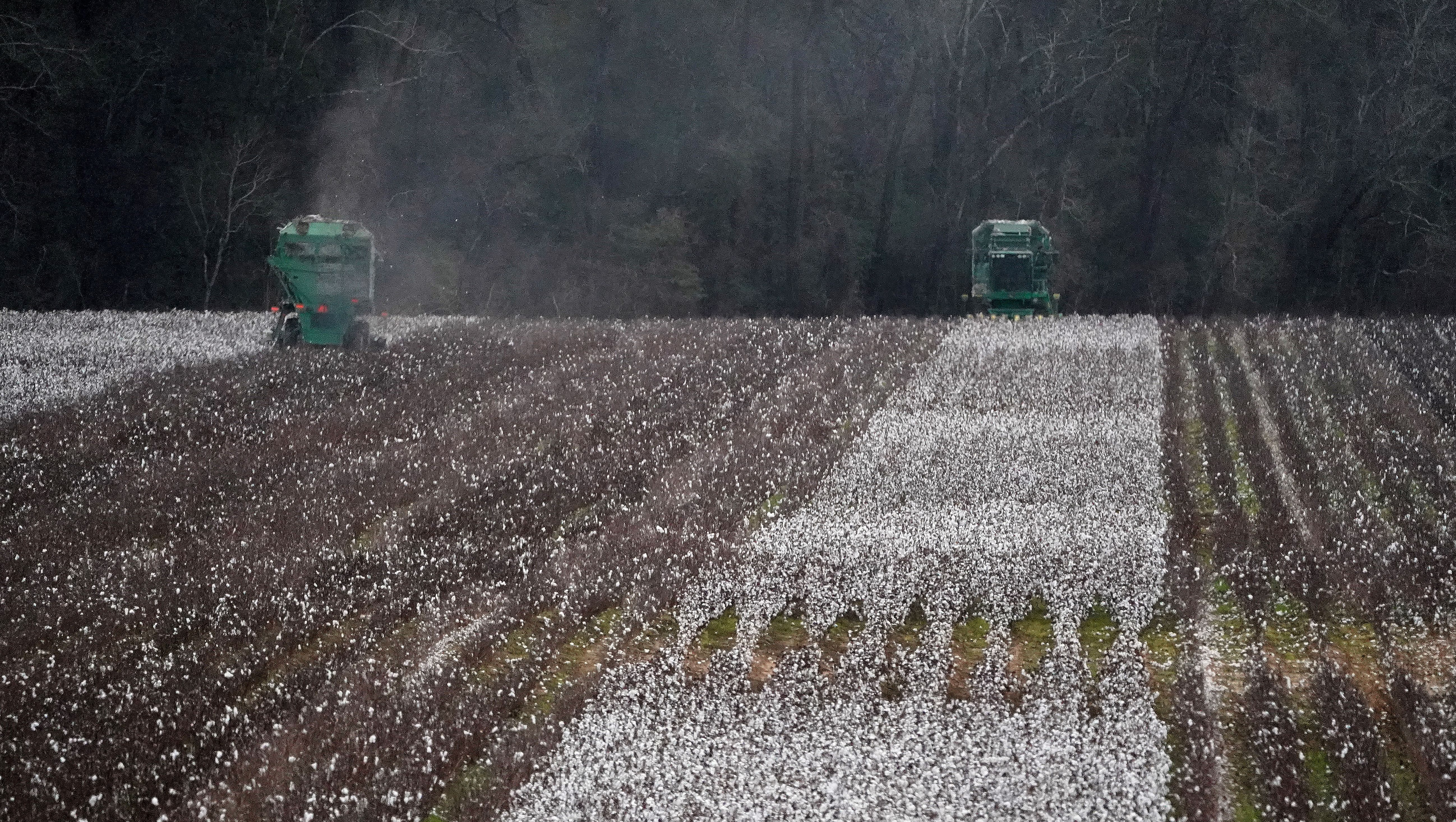 Farm equipment harvests cotton in a field just outside Montgomery, Alabama, U.S., December 14, 2017.