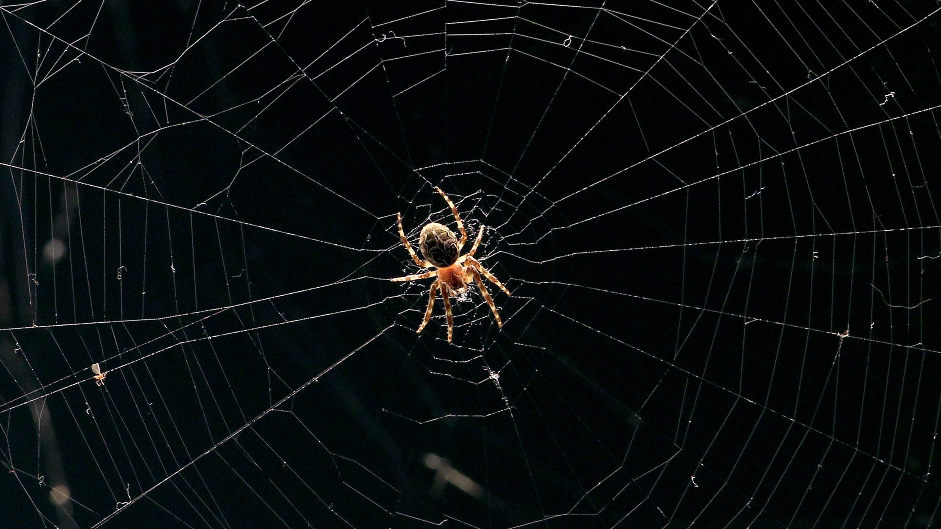 Don't kill the next spider you see in your house — Quartz