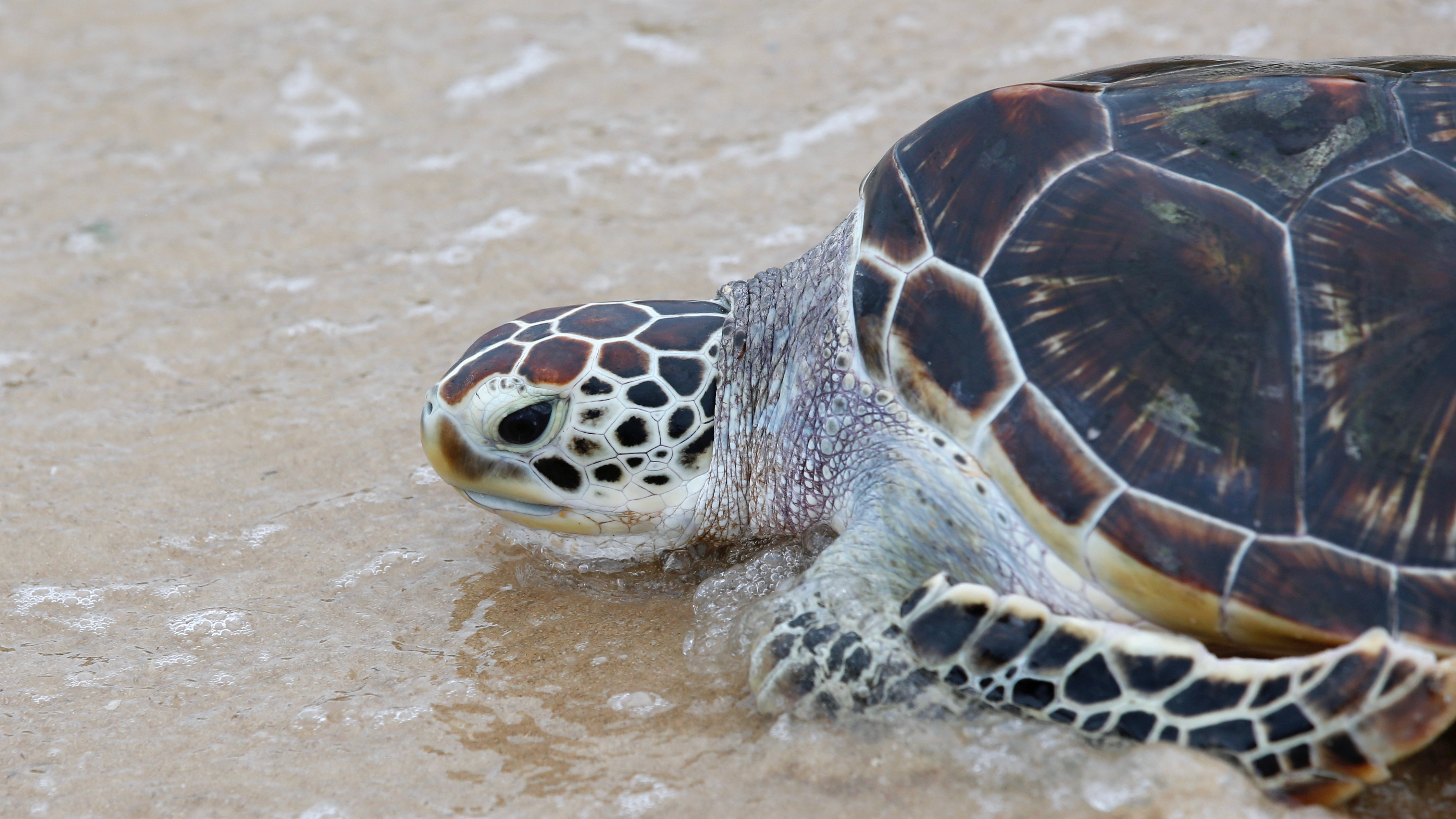 Turtles can teach us about evolution and survival.