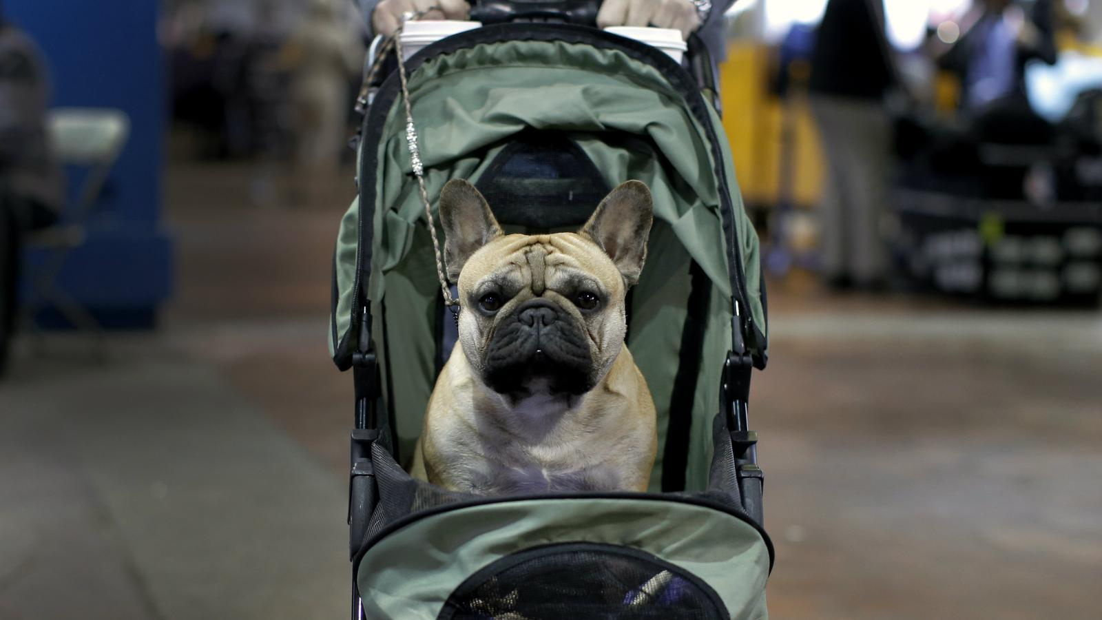 Americans' favorite dogs are among 21 breeds banned on