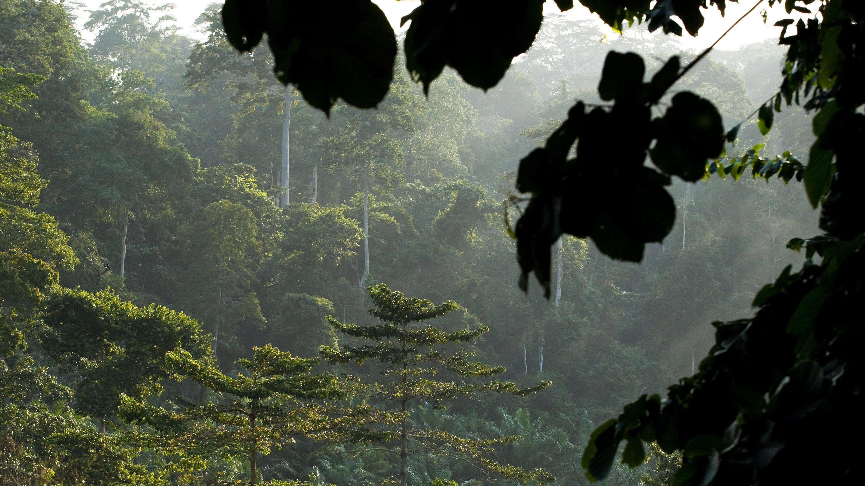 Ghana Rainforest Copenhagen Climate