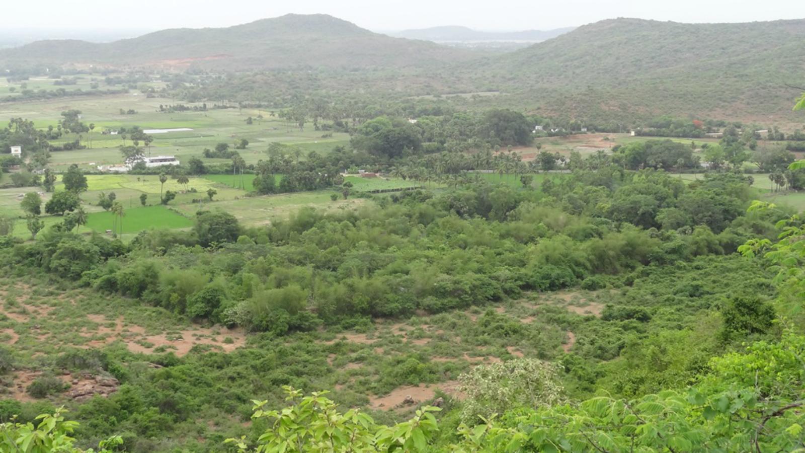 India-Farm