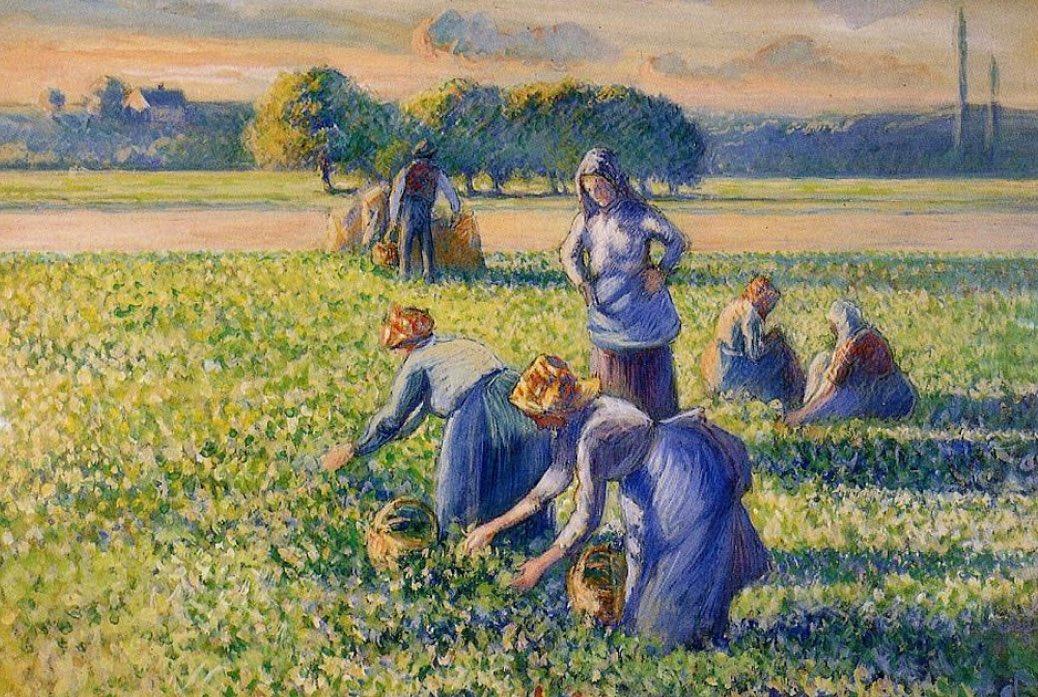 La cueillette des pois by Pissarro