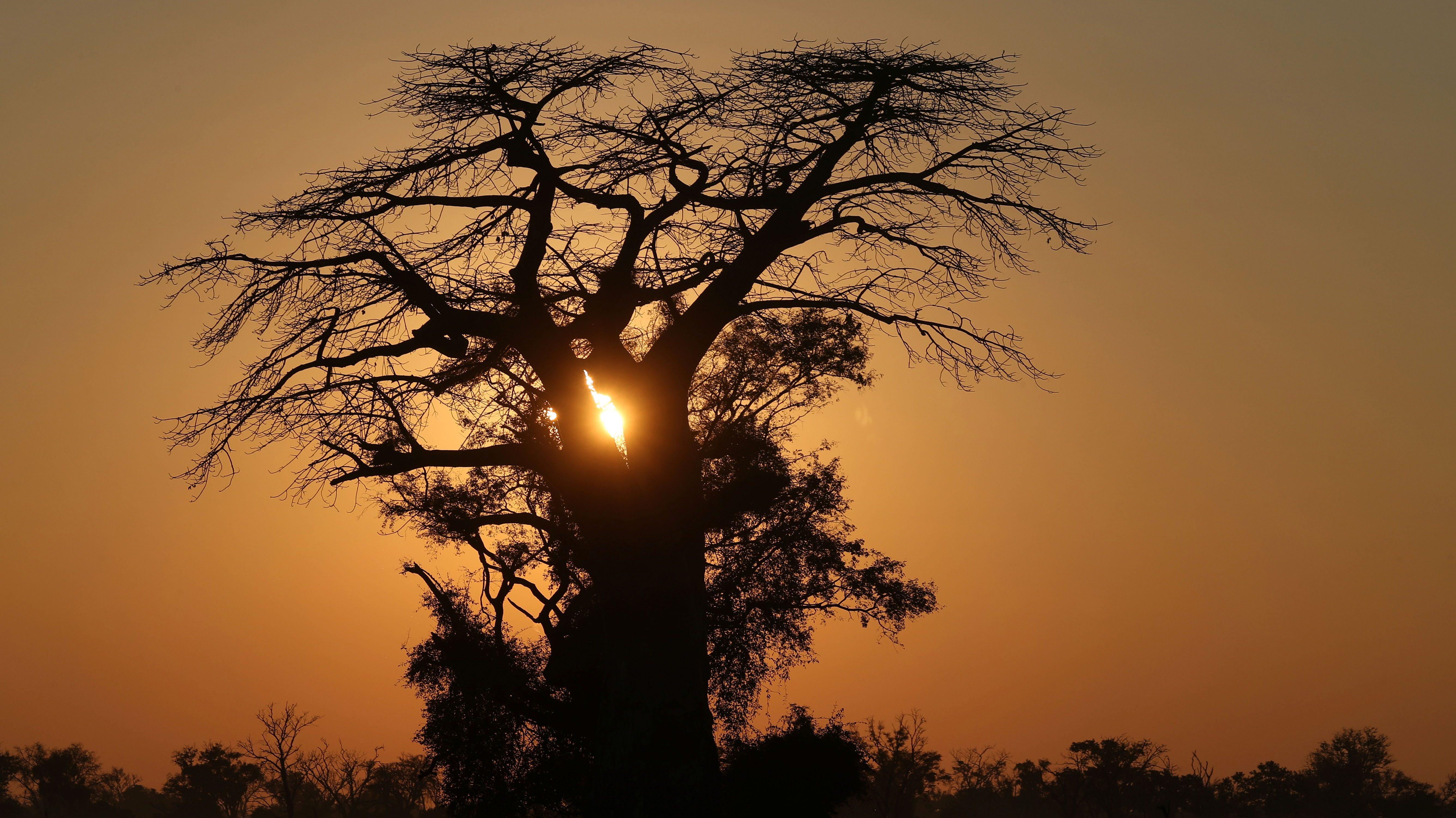 The sun rises behind a Baobab tree in the Okavango Delta, Botswana, April 25, 2018.
