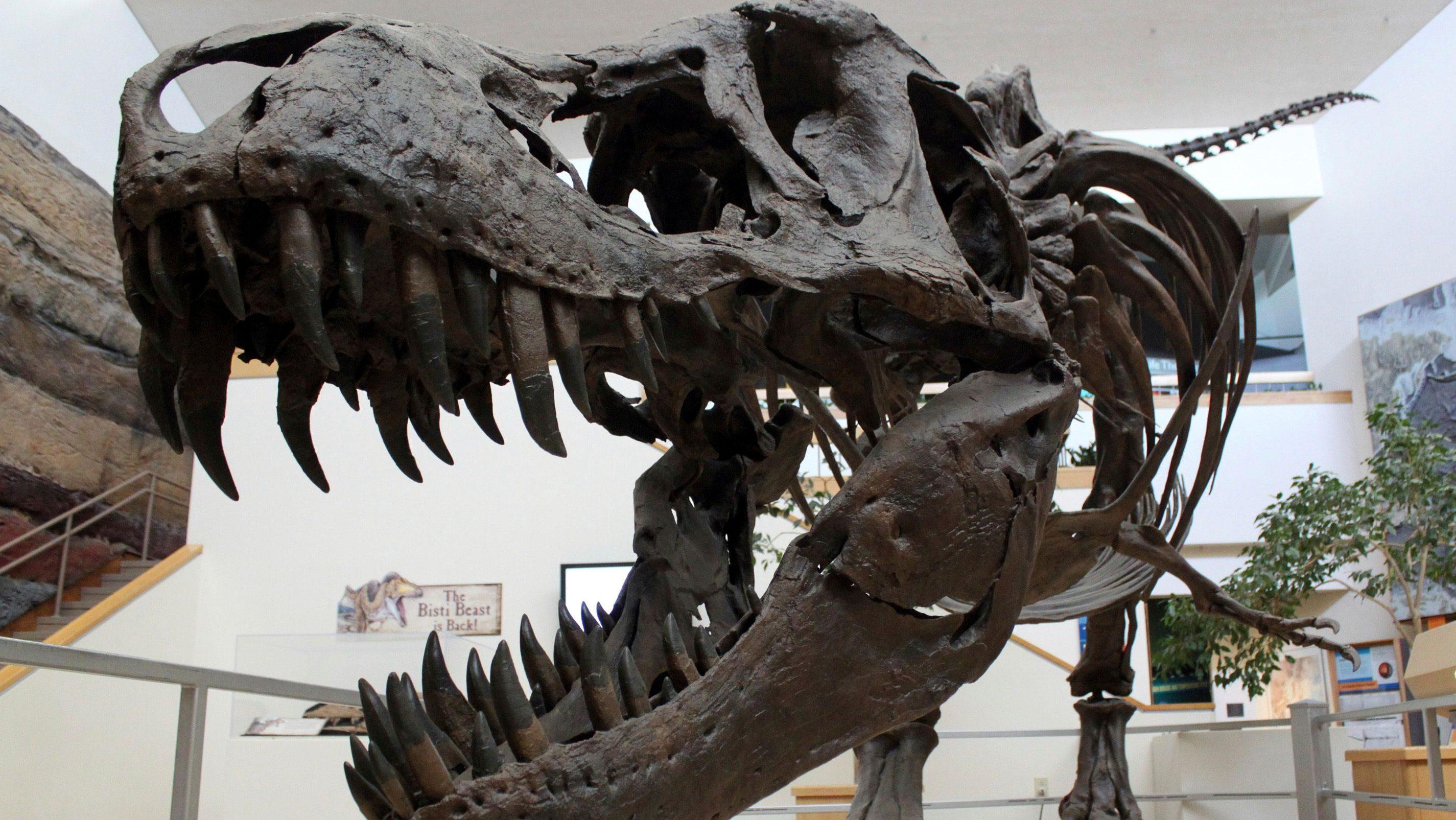 armeria Quartiere Regina  Dinosaur skeleton auctions mean that important fossils are going ...