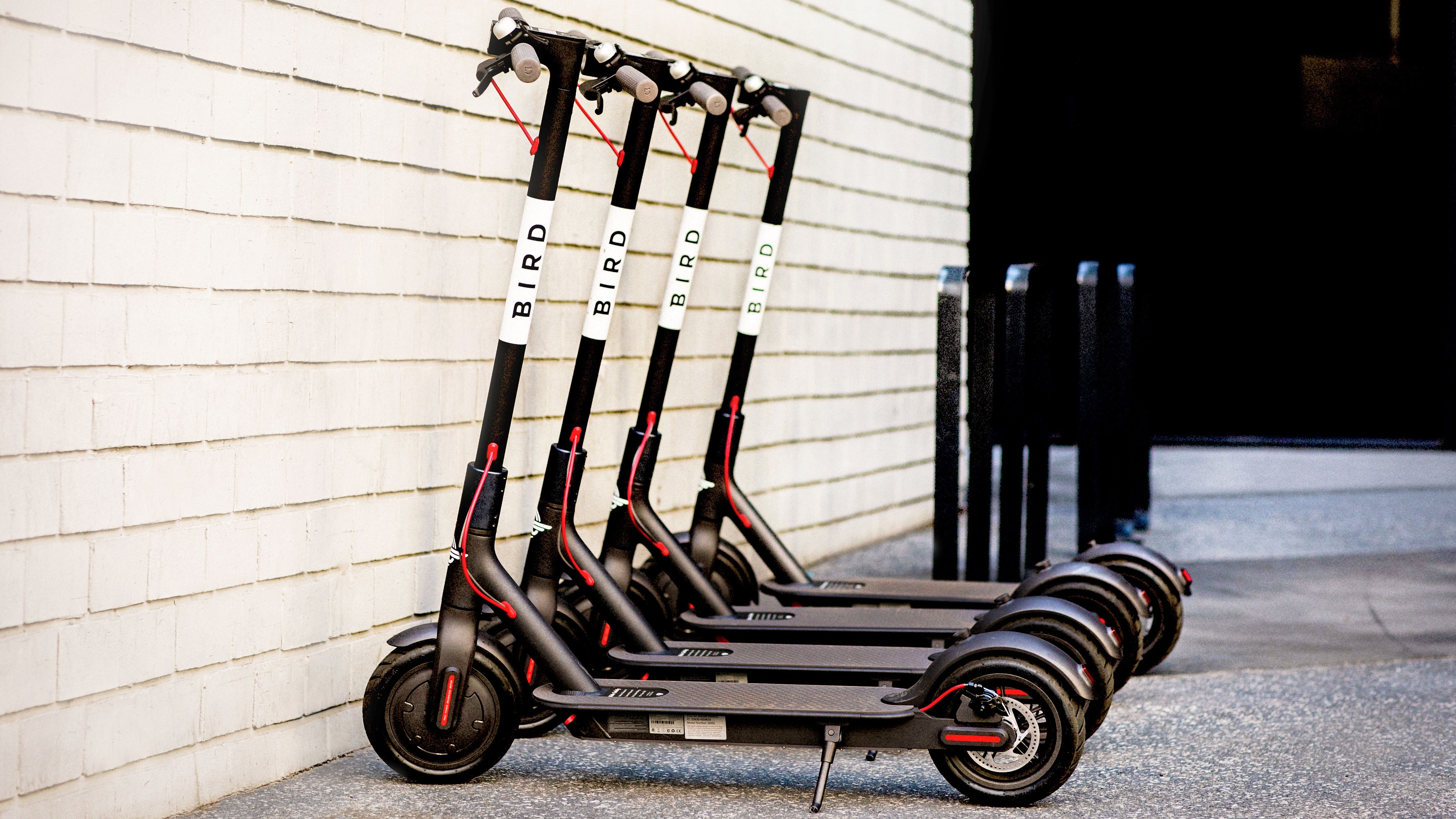 A line of Bird electric scooters
