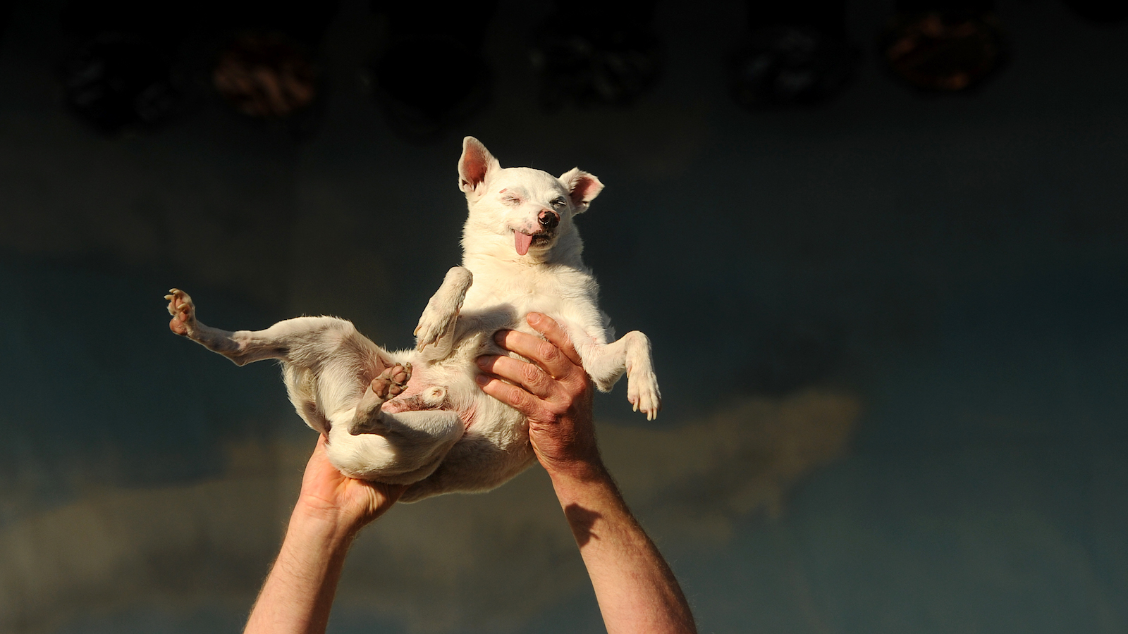 dog being held in the air
