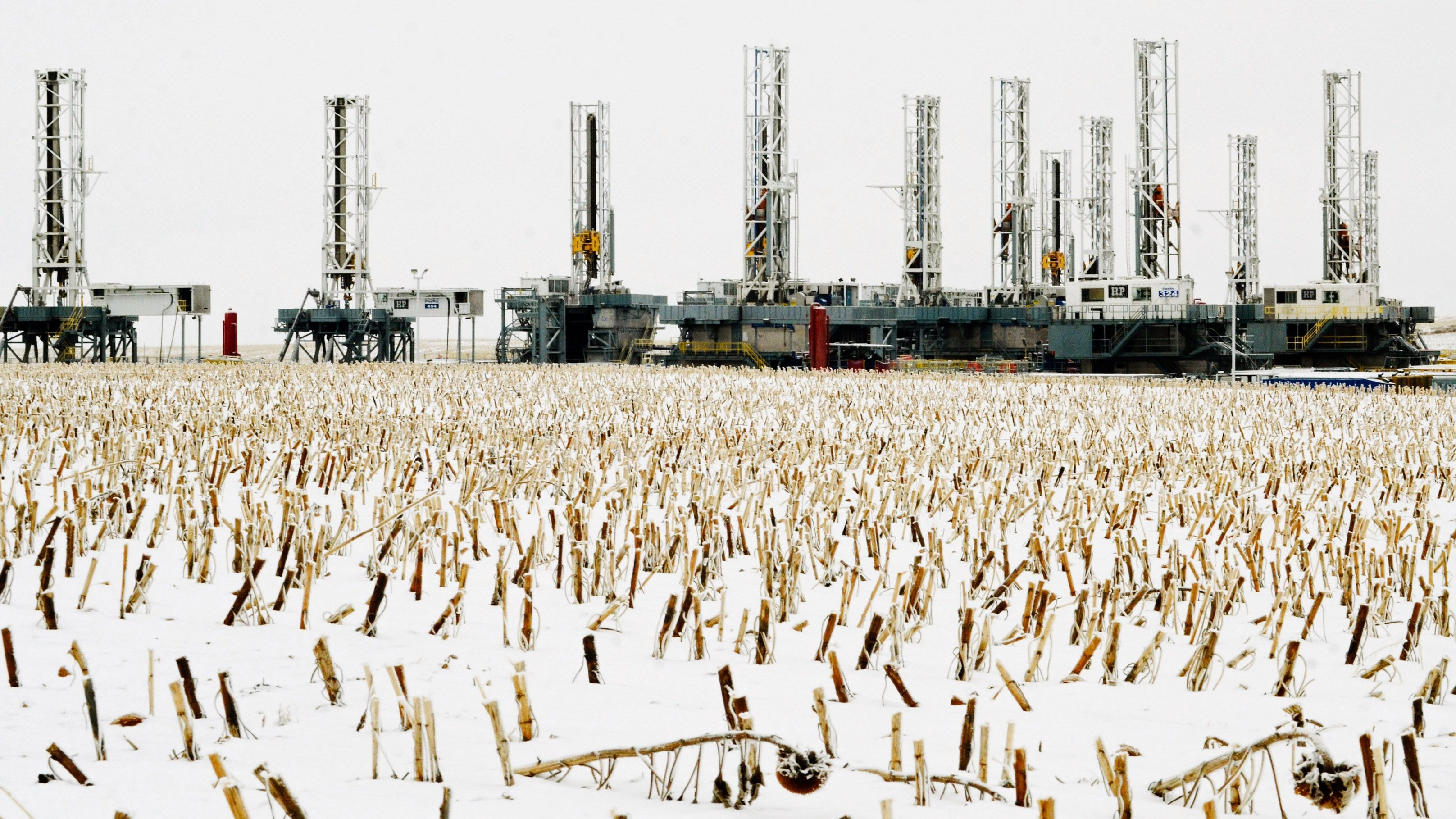 Sunflowers stalks punctuate the snow in a field near dormant oil drilling rigs which have been stacked in Dickinson, North Dakota