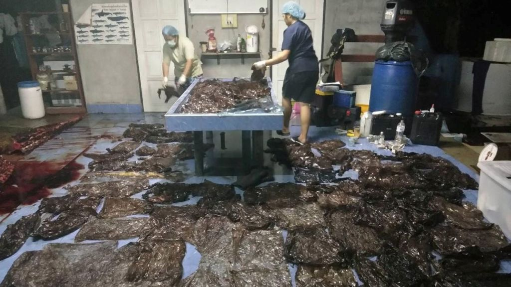 An autopsy pulled more than 17 pounds (8kg) of plastic out of the whale's gut.