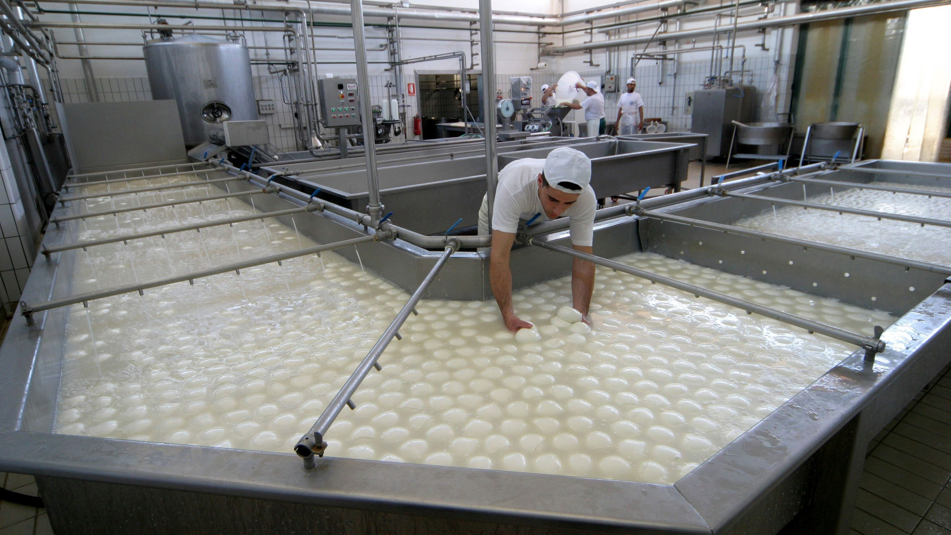 Buffalo mozzarella cheese is prepared at a dairy in Caserta, near Naples, southern Italy, in this 2006 photo. Makers of Italy's prized buffalo mozzarella took out full-page ads in Italian newspapers Friday, March 21, 2008 assuring consumers the cheese was safe after high levels of dioxin were found in some samples of buffalo milk. The tainted products came from a few buffalo dairies in the southern Campania region, whose reputation as a top agricultural producer already has been tarnished by the months-old garbage crisis that has fueled fears of food contamination. (AP Photo/Salvatore Laporta)