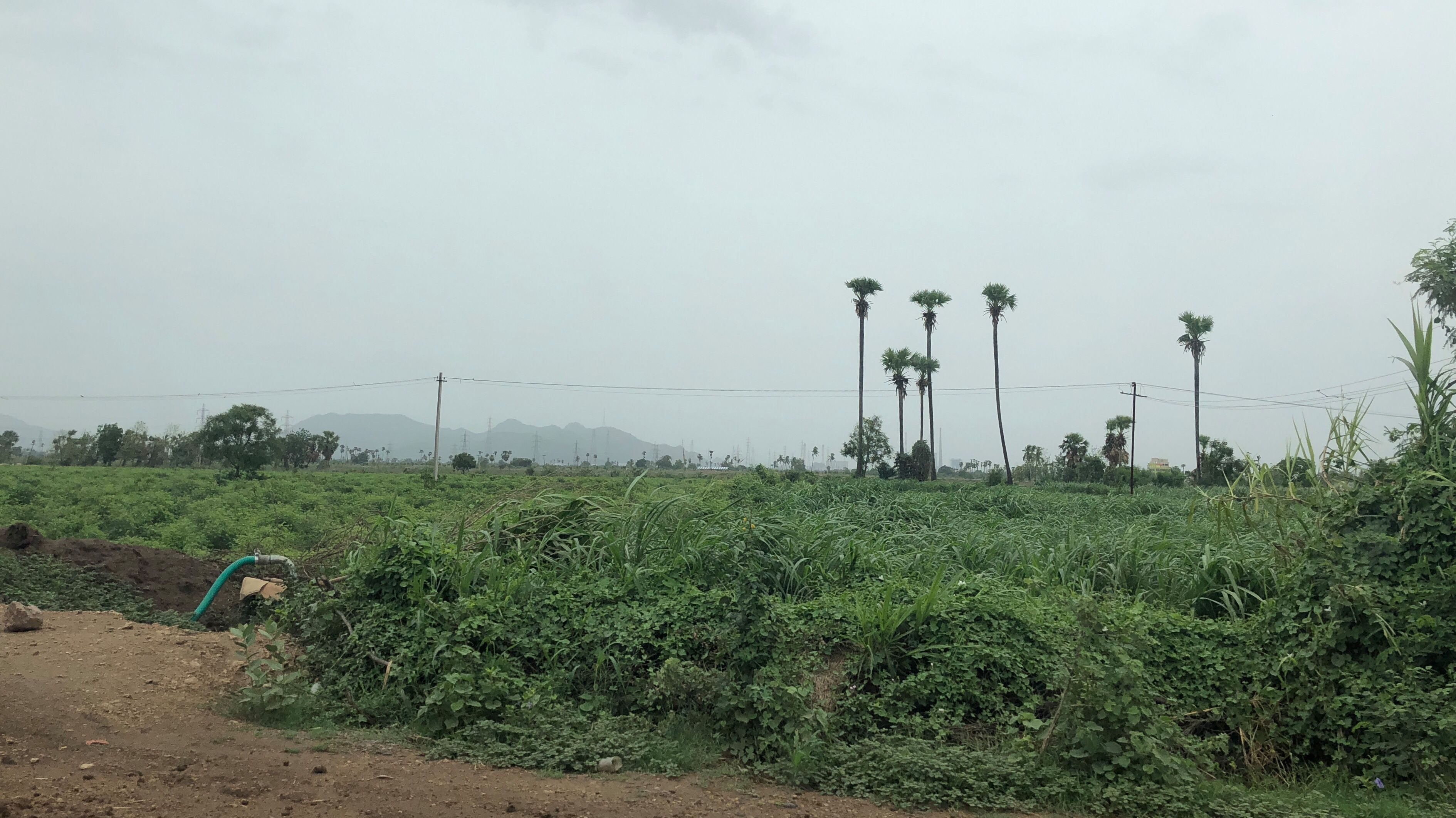 Fields around Rayapudi village, a township that comes under the capital, Amaravati. Photo credit: Quartz/Ananya Bhattacharya
