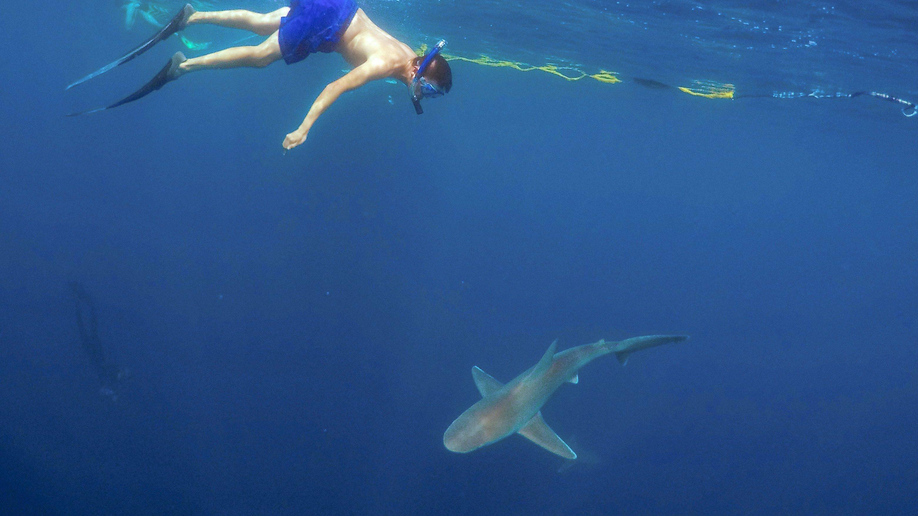 A man swimming above a shark.