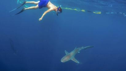 A man swimming above a shark.