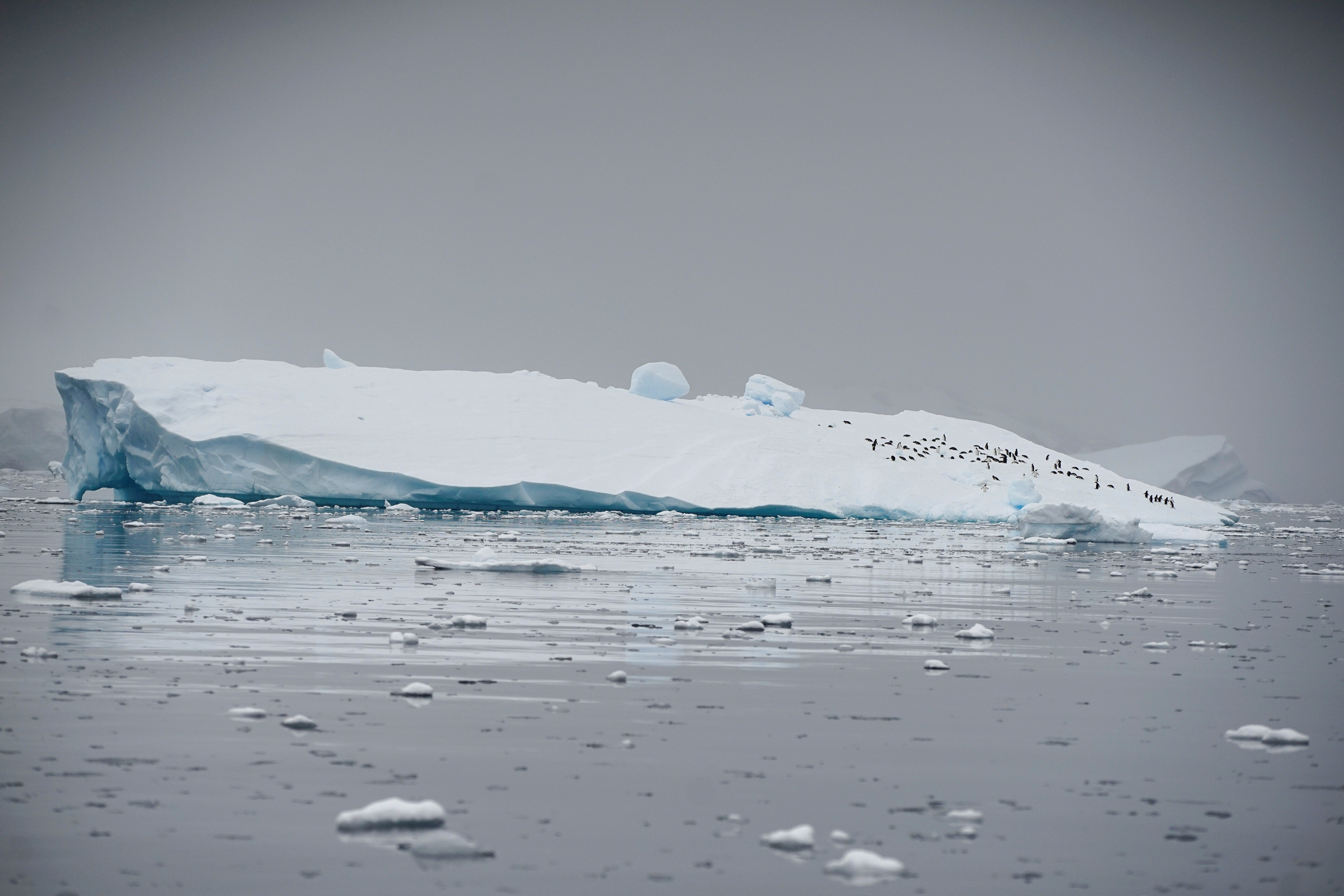 An iceberg floats in Andvord Bay, Antarctica, February 14, 2018.