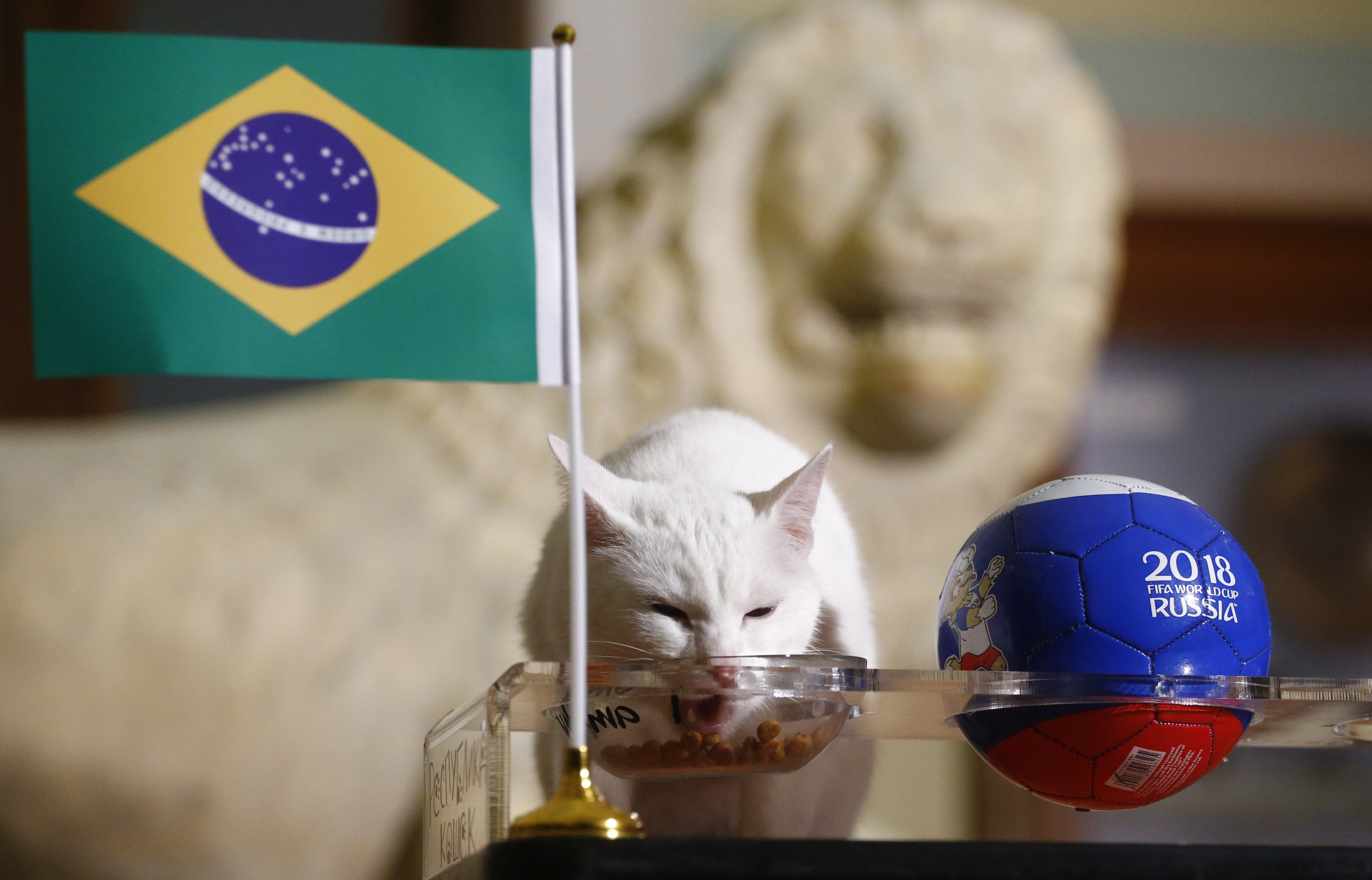 Achilles the cat, one of the State Hermitage Museum mice hunters, attempts to predict the result of the 2018 FIFA World Cup match between Brazil and Costa Rica during an event in Saint Petersburg, Russia June 22, 2018. REUTERS/Anton Vaganov - HP1EE6M0OQ5EI