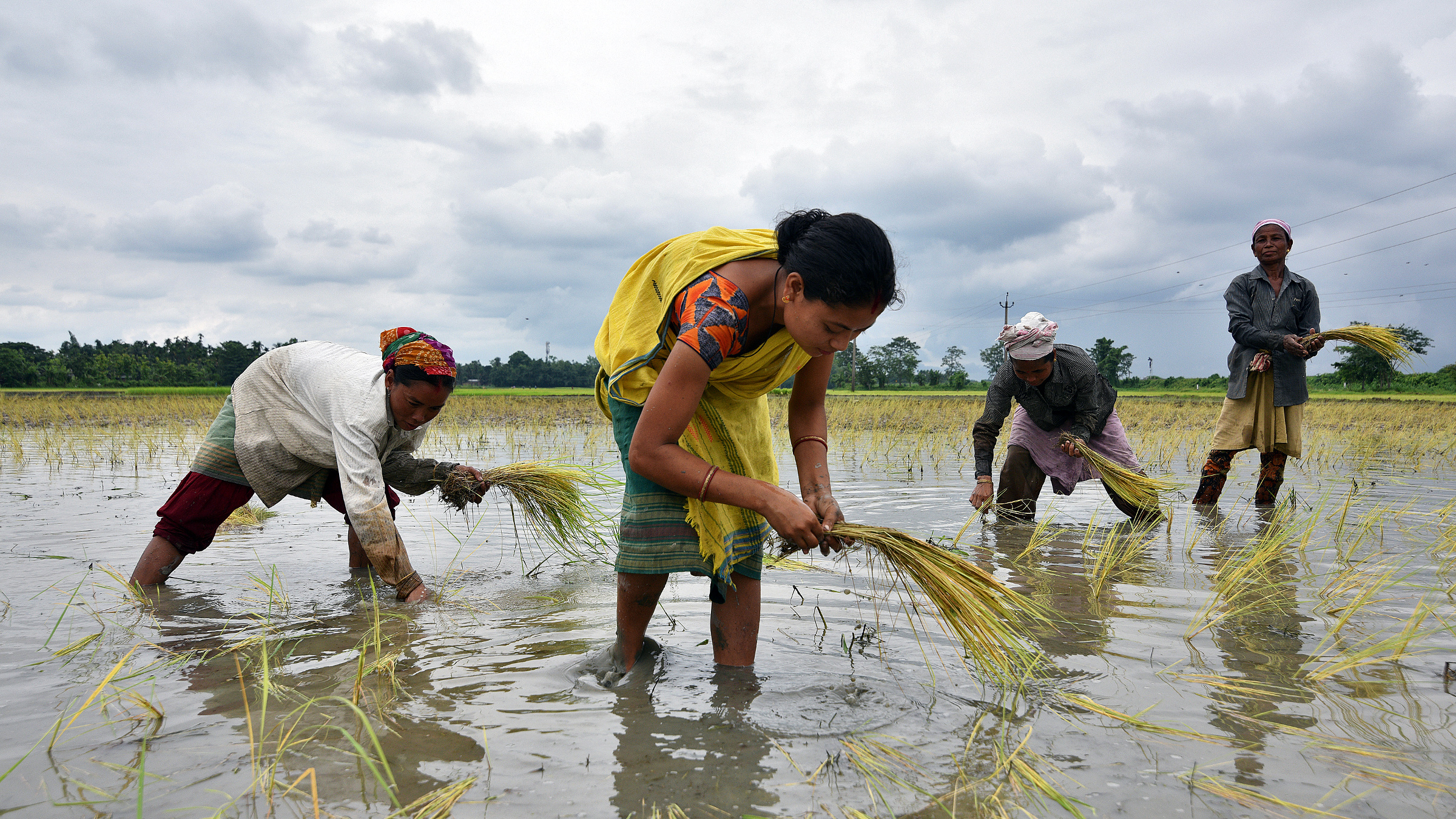 Women plant rice saplings at a paddy field in a village in Nagaon district, in the northeastern state of Assam, India, July 3, 2018.
