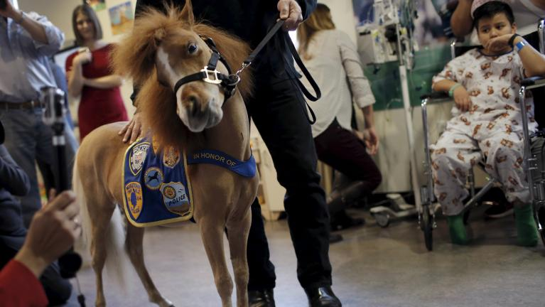 Image result for Southwest Airline Miniature Horse