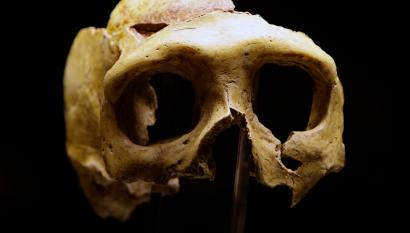 Our prehistoric ancestors all mated with one another - image on https://sattvnews24.com