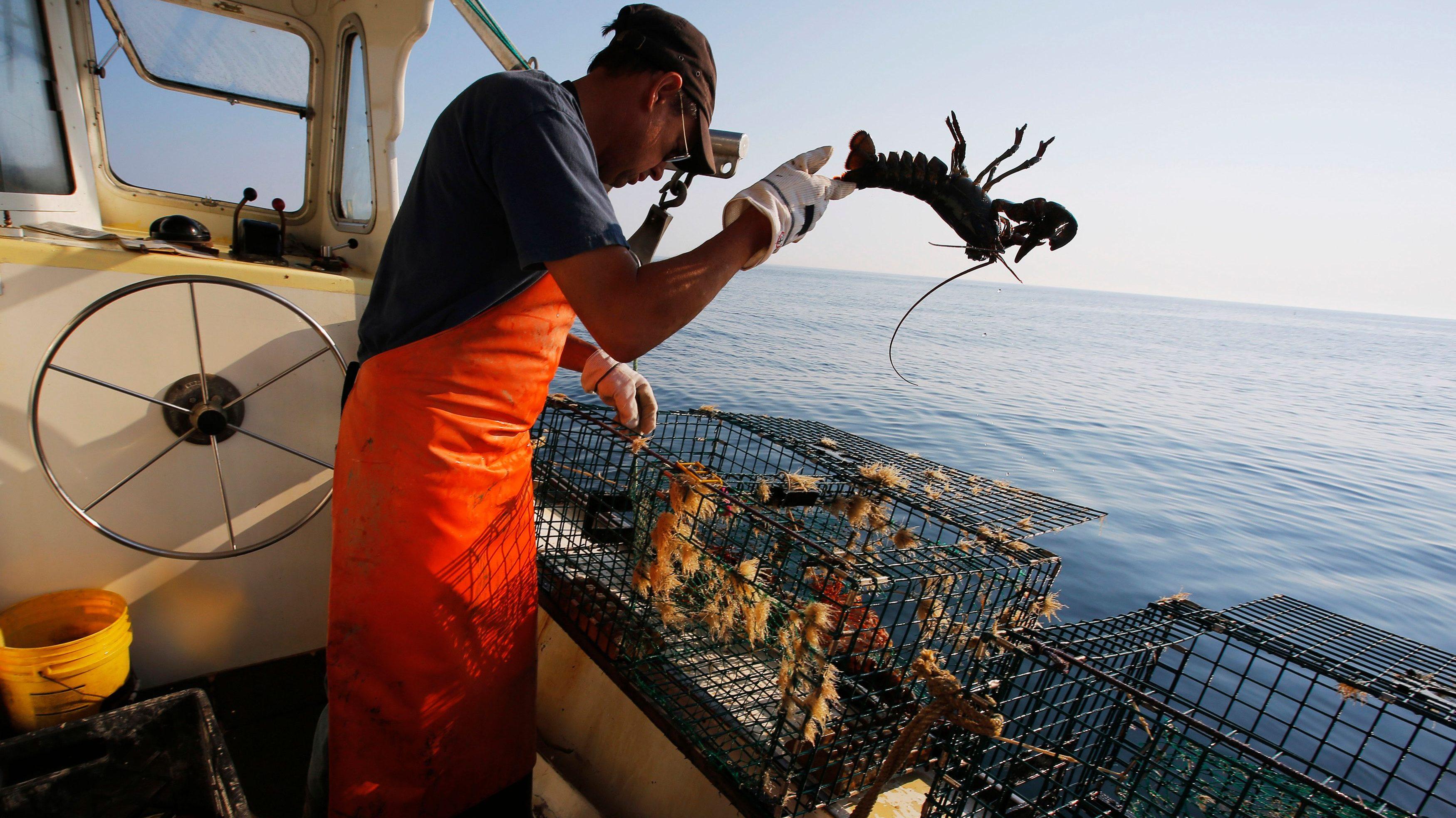 China U0026 39 S New Method Of Tariff Retaliation Is Destroying Us Lobster Exports  U2014 Quartz