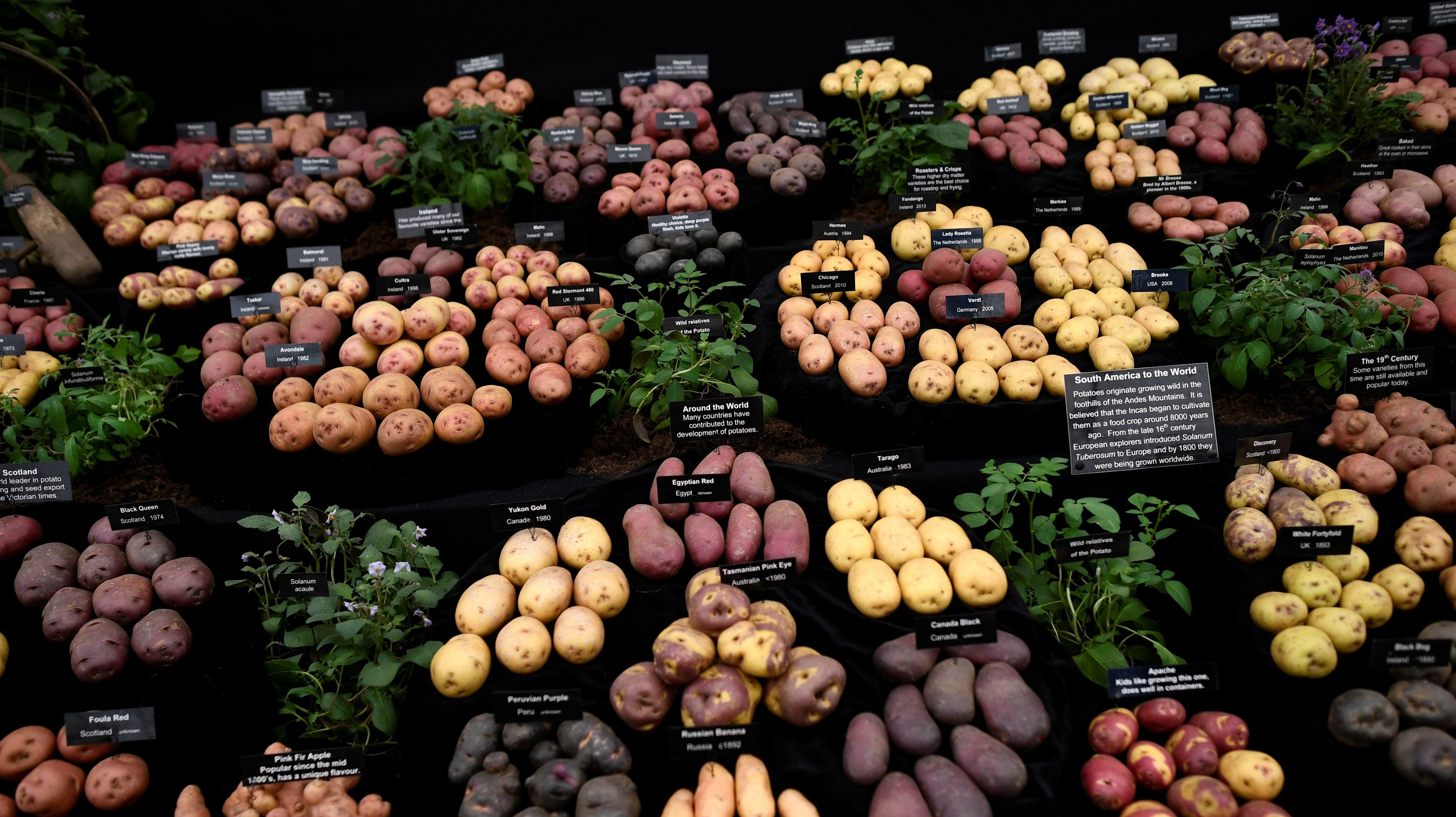 Are potatoes healthy? They are actually an almost perfect